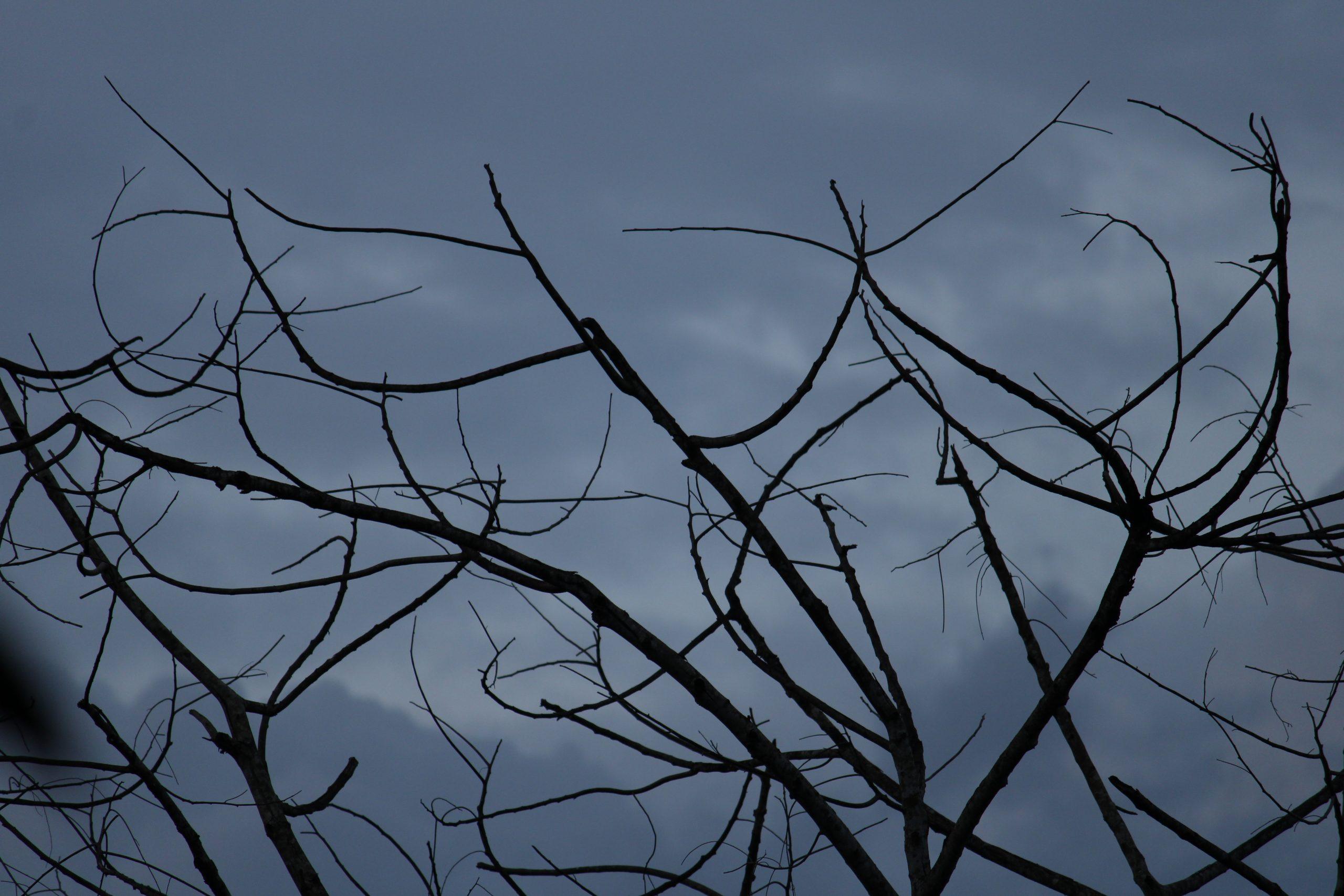 Branches under a dark sky.