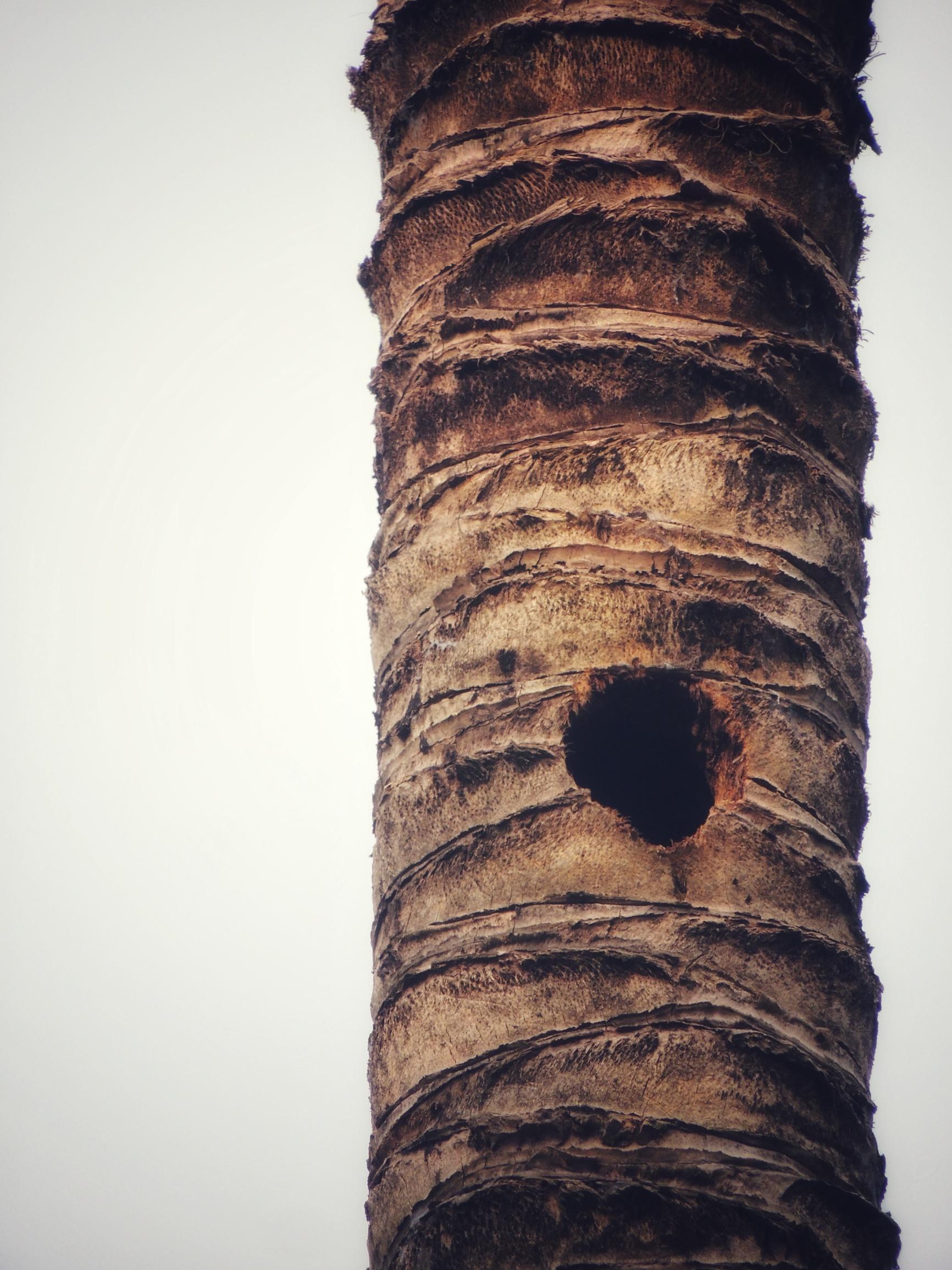 Nest of woodpecker in the tree