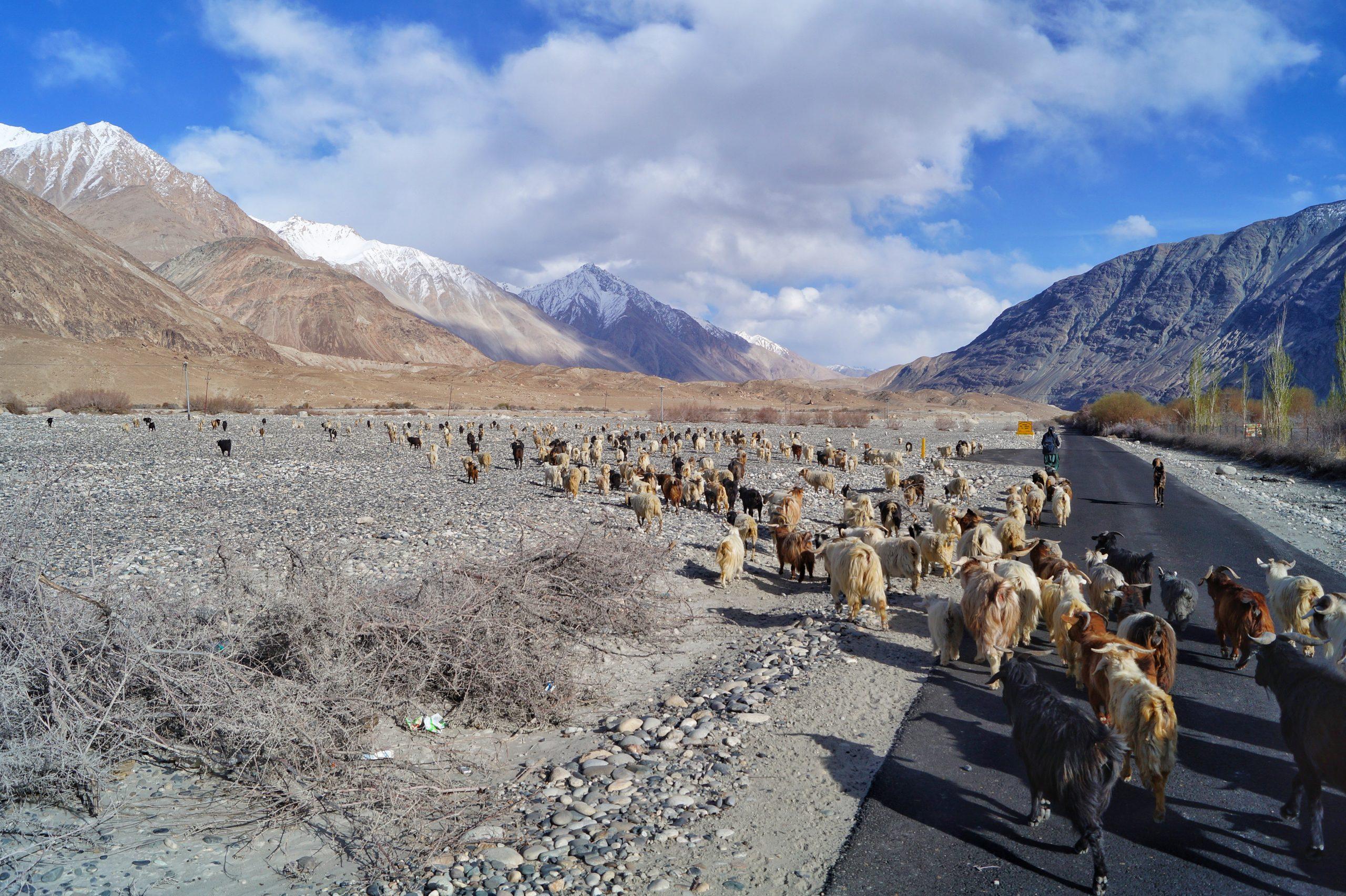 Number of Herd Photo