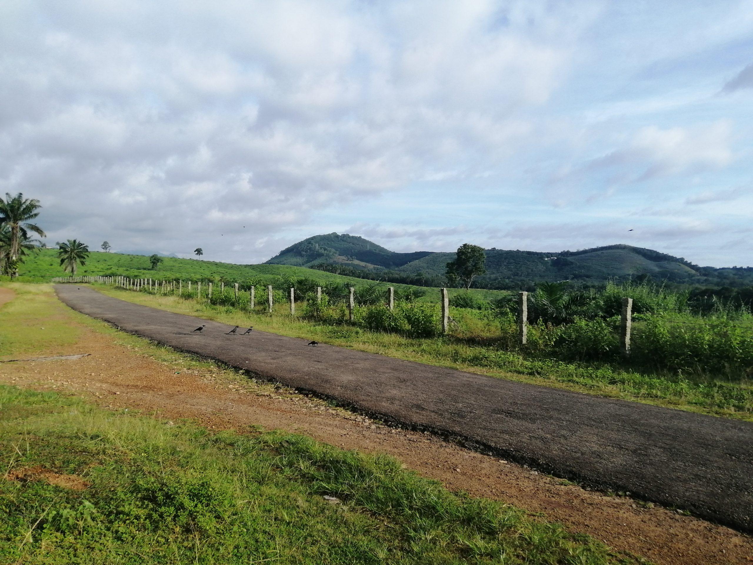 Road on an idyllic place