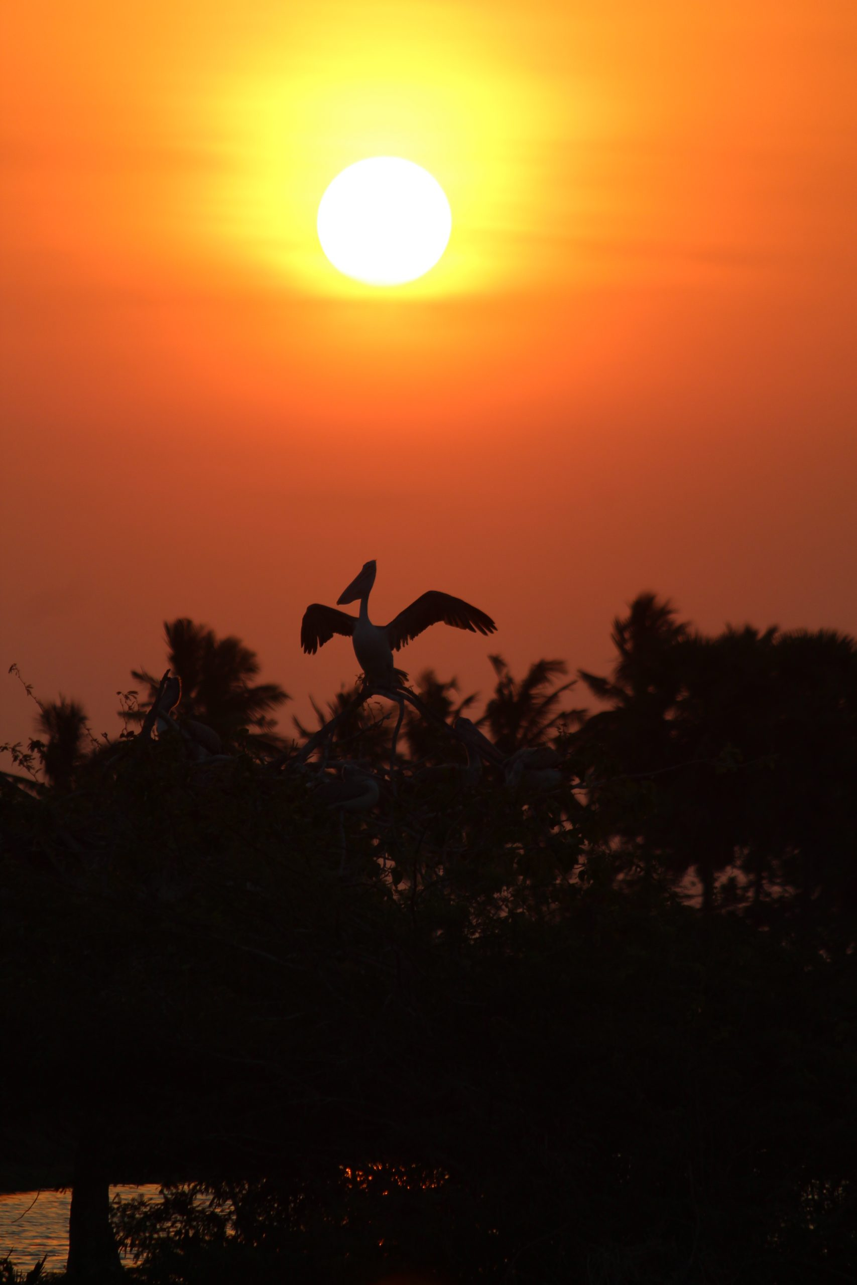 Orange sunset sky and a silhouette of flying bird