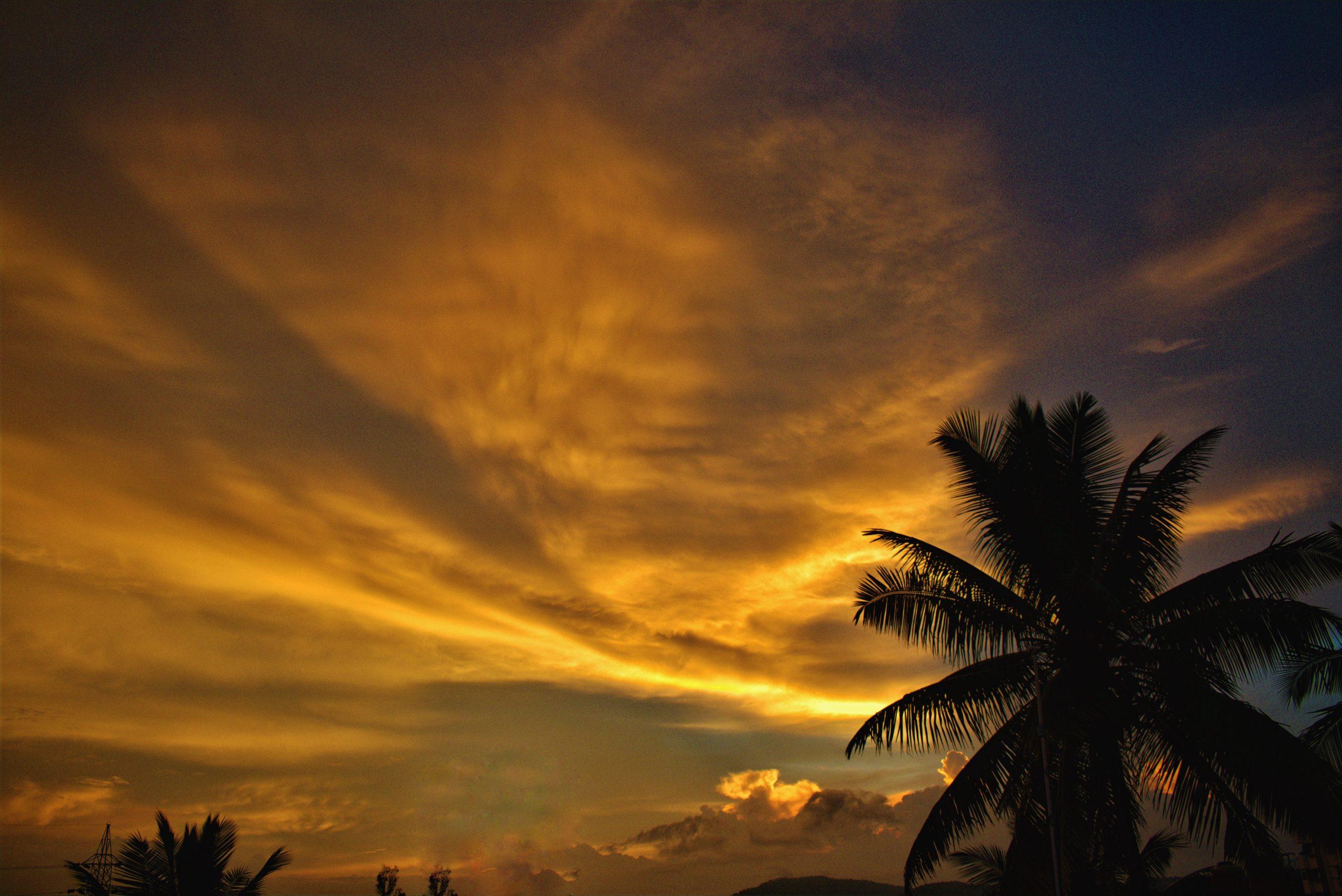 Orange sunset sky with palm tree silhouette