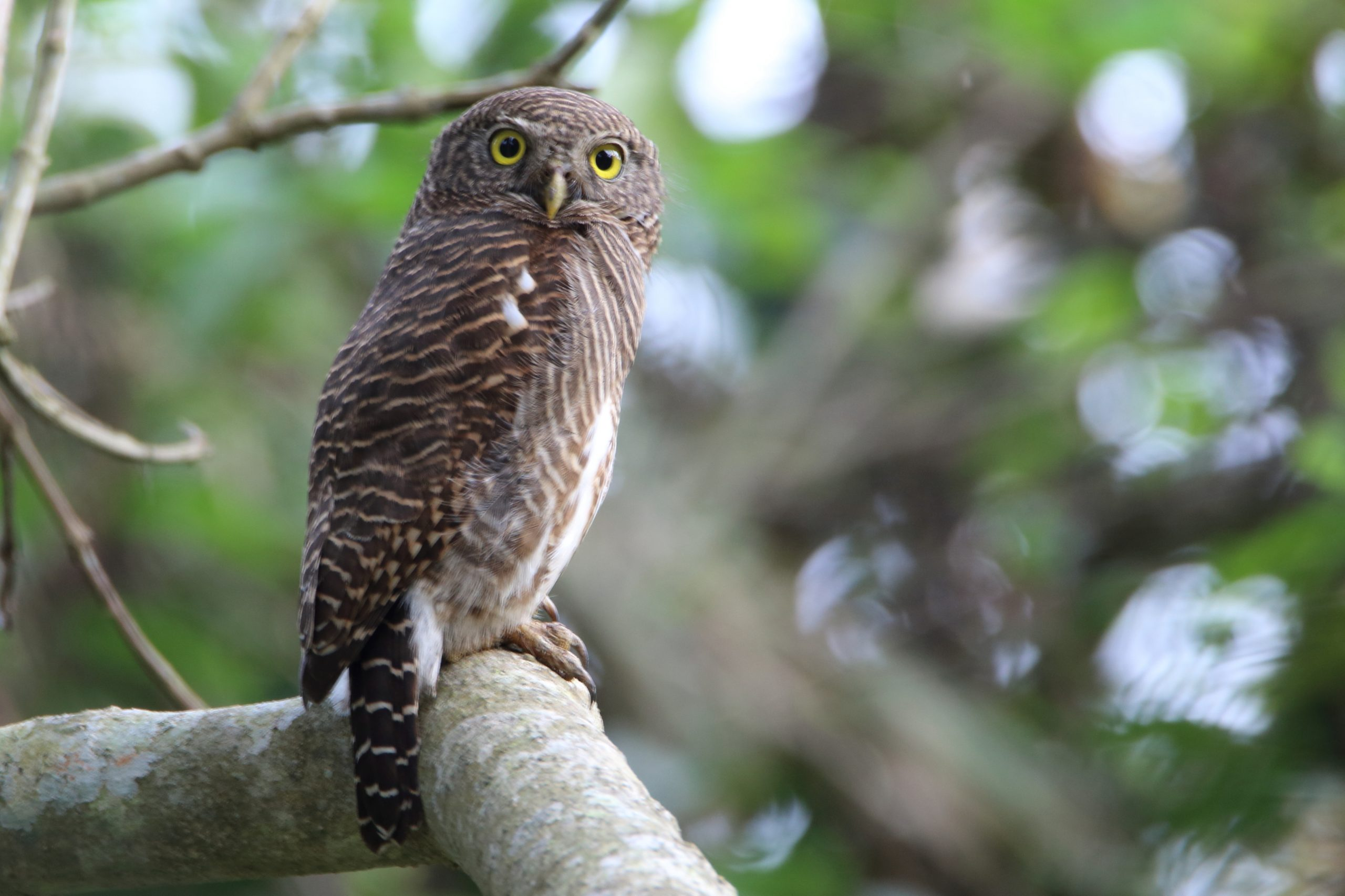 Owl perched on a tree