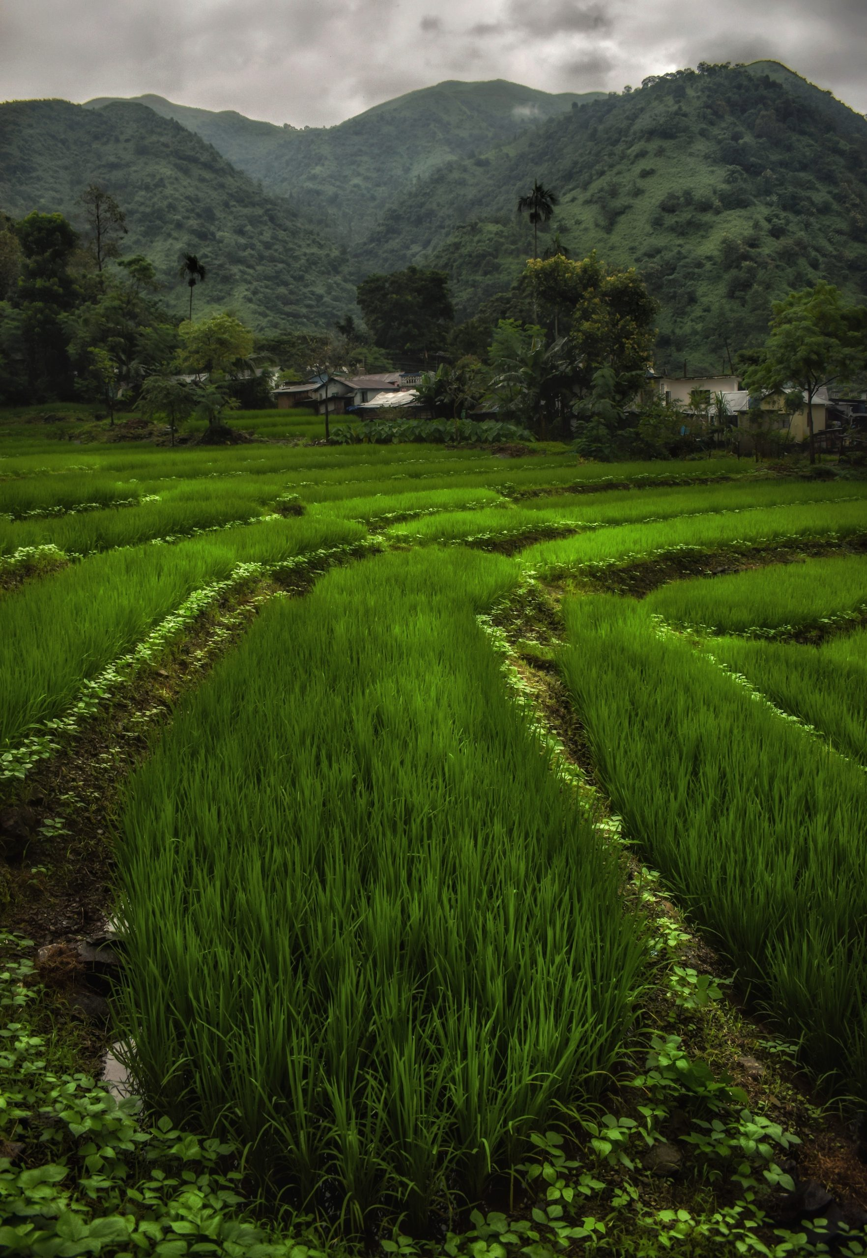 Paddy Field in the Mountain