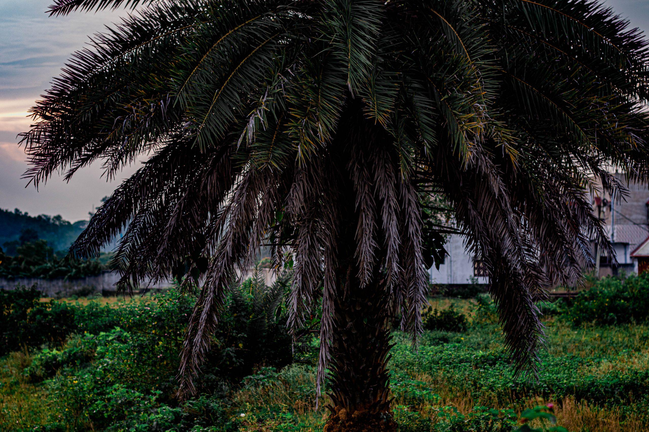 Gorgeous palm tree.