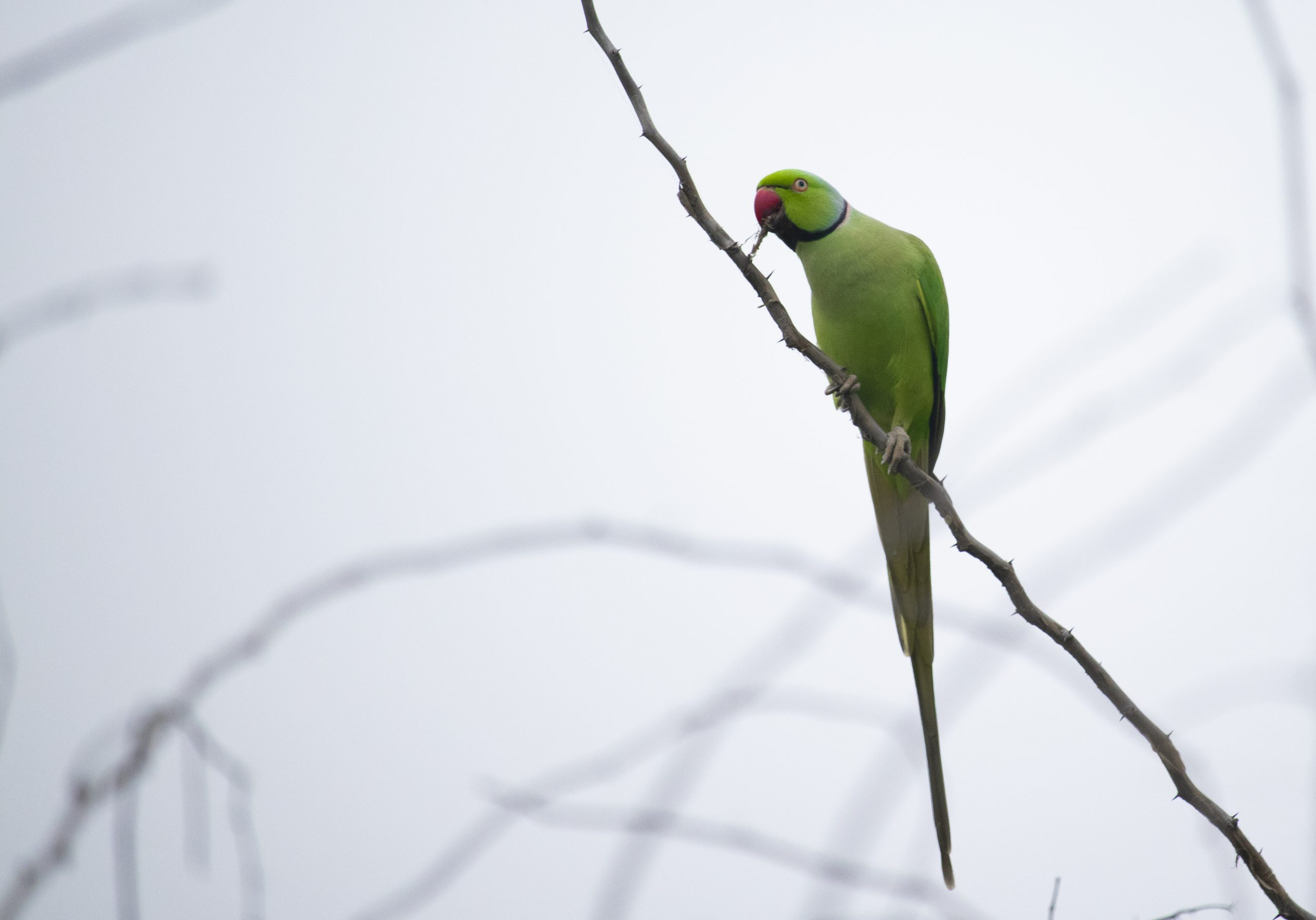 Parrot perched on a tree branch
