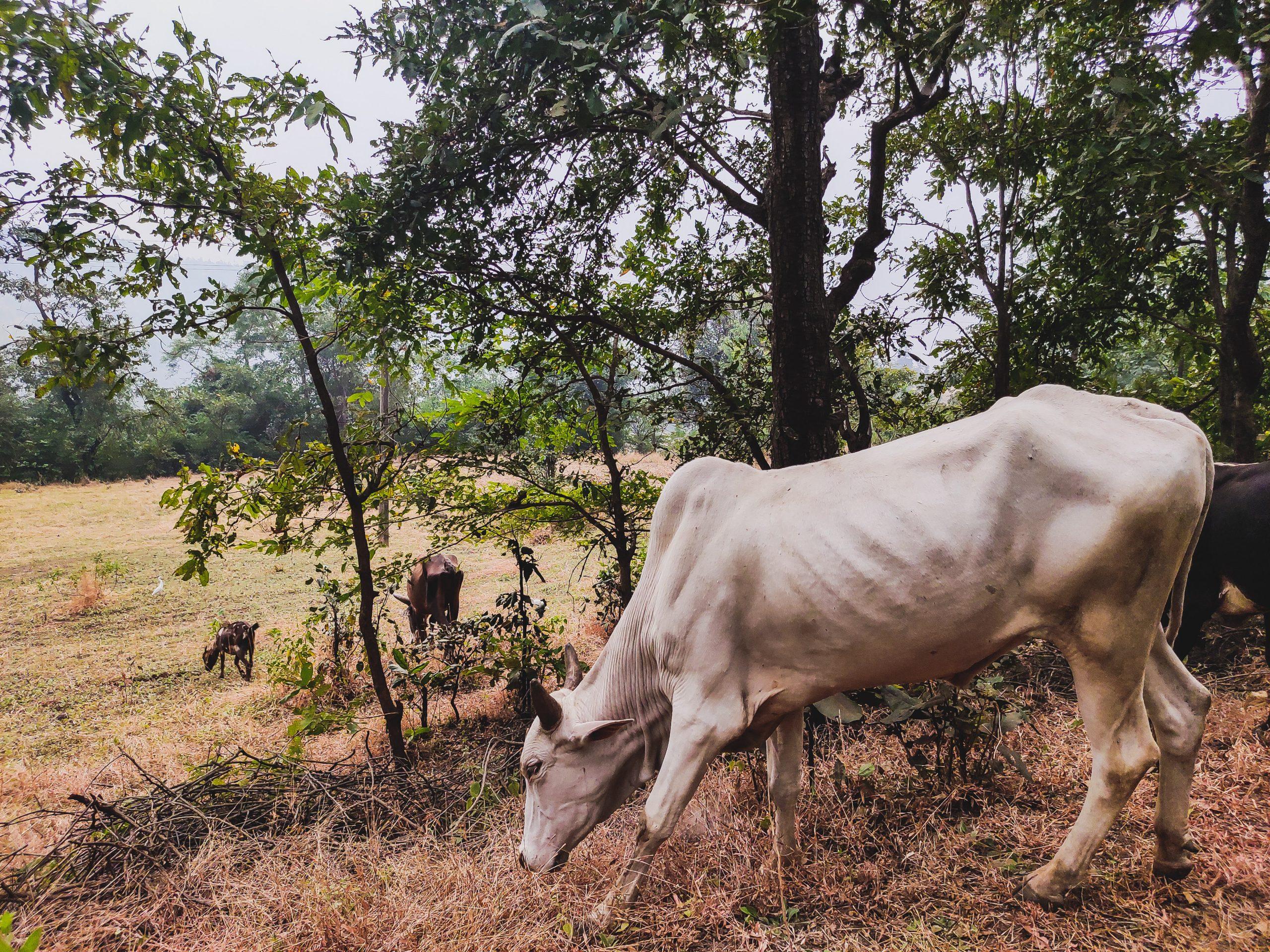 Pasture in Wilson Hills
