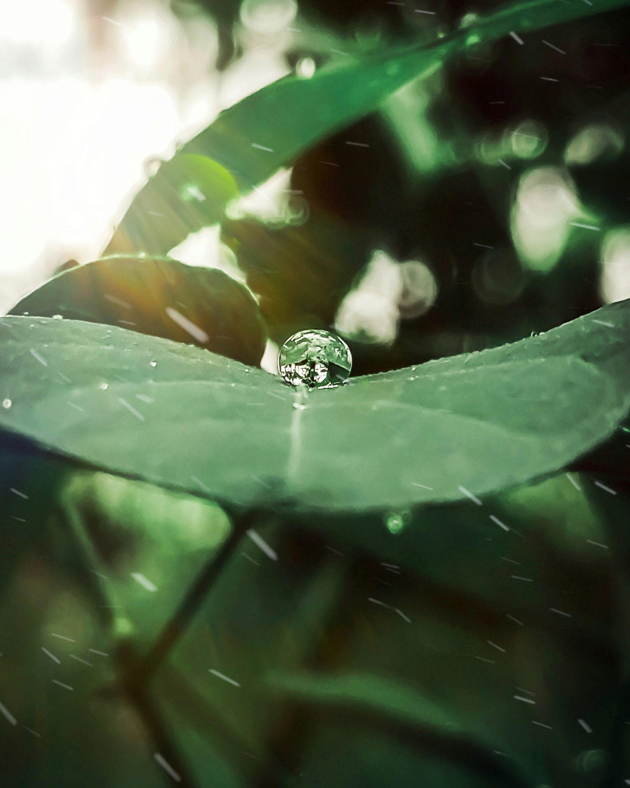 Pearl like drop on leaf
