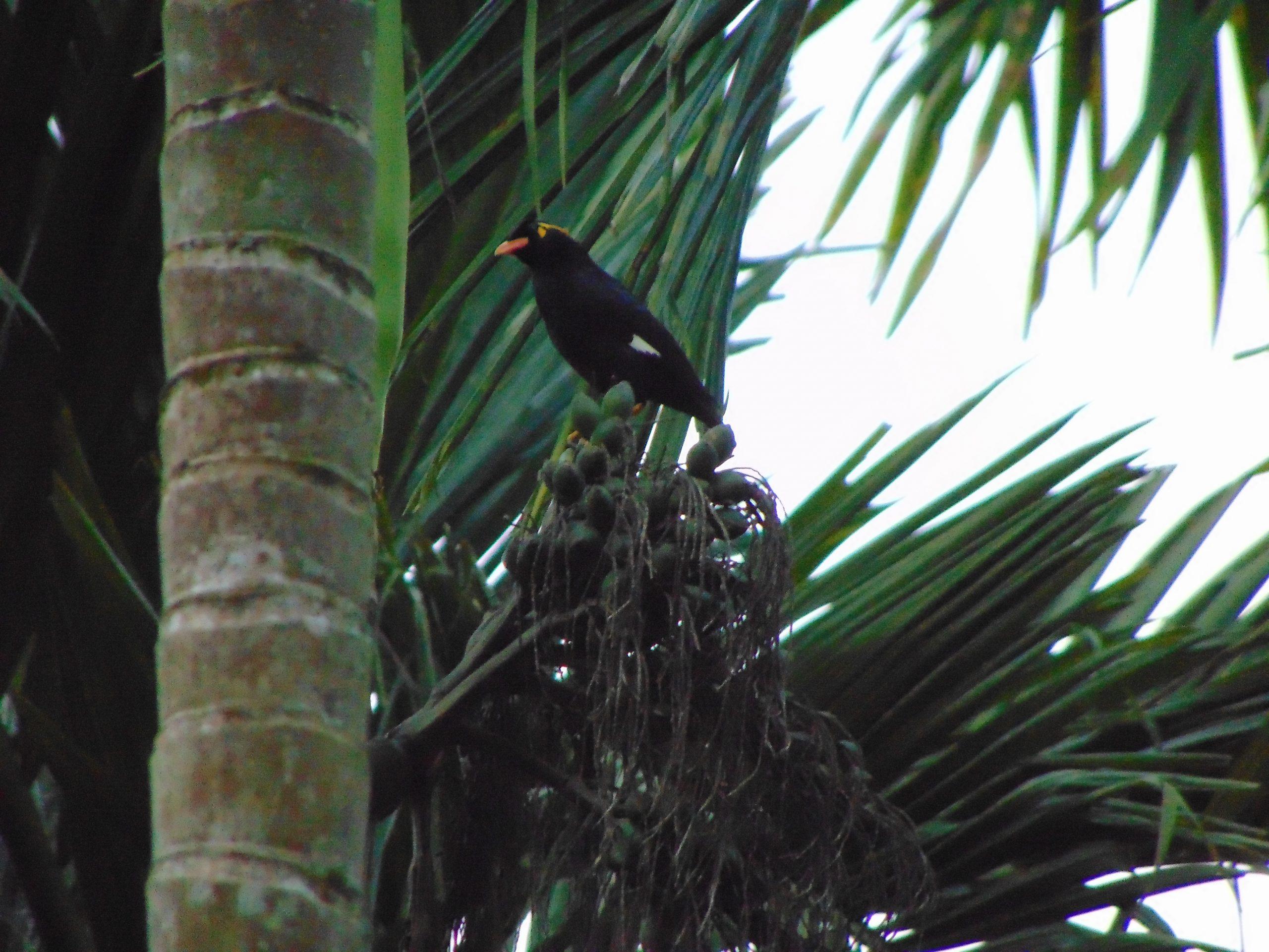 Perching Bird on a Tree