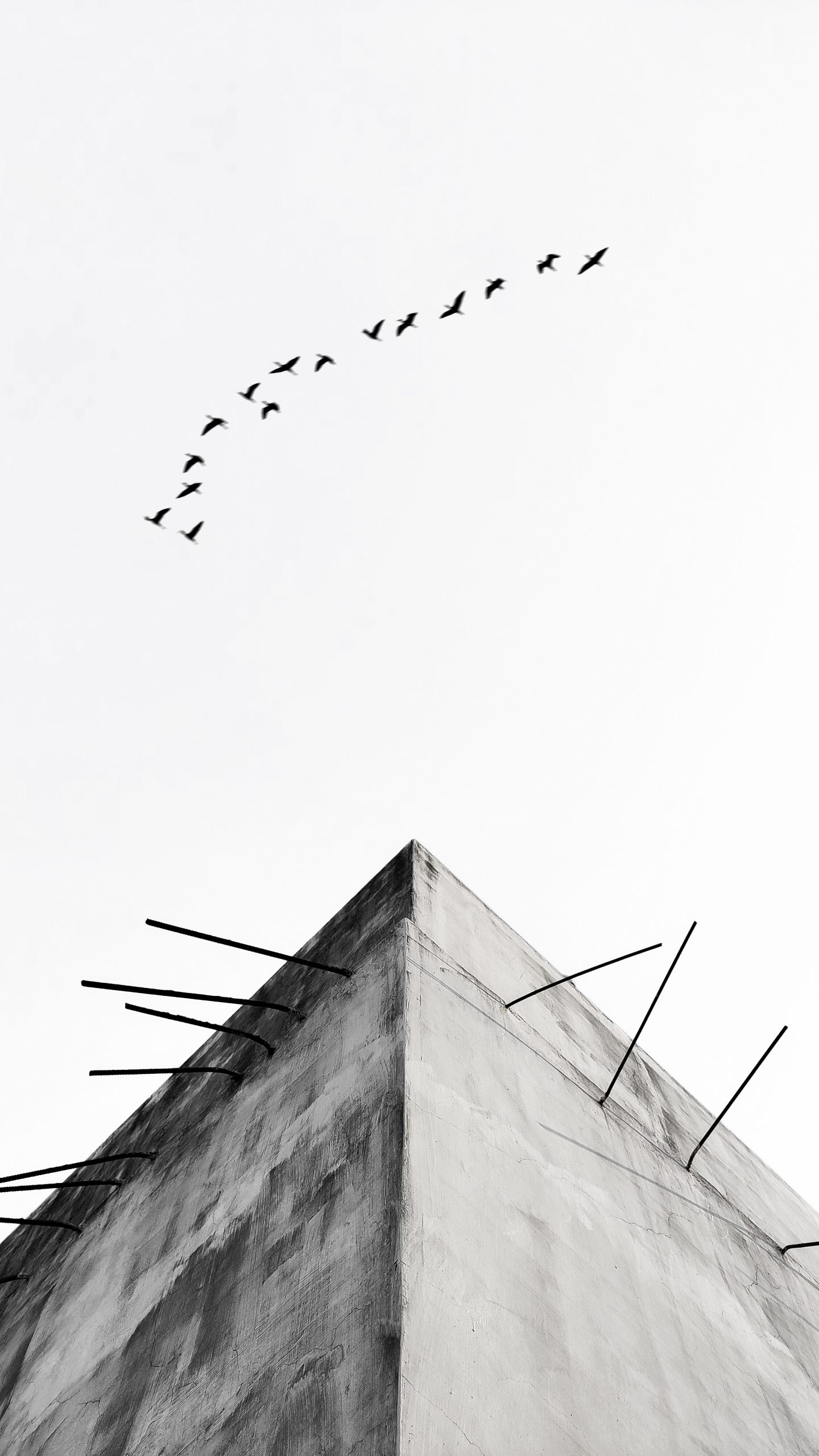 Wall and birds