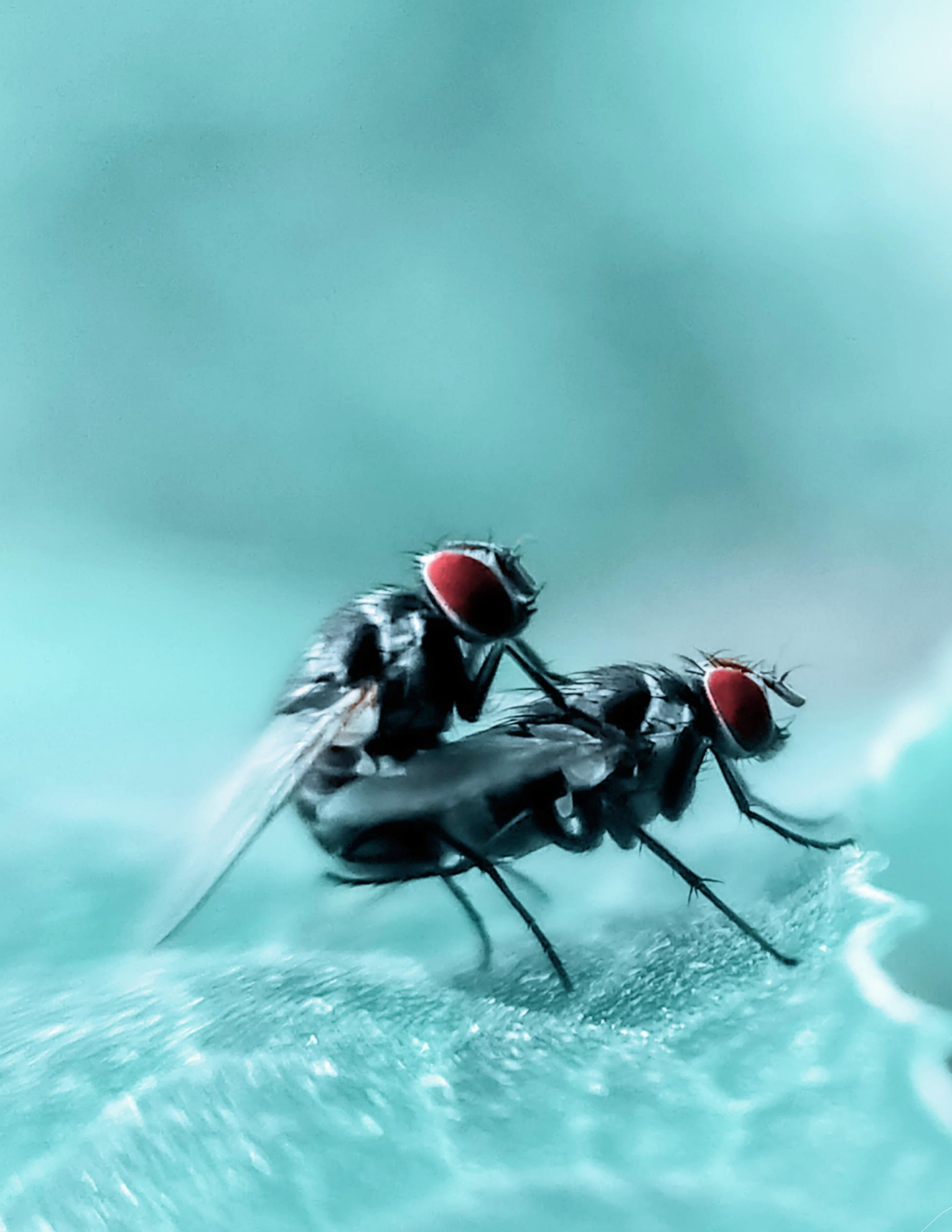 A pair of insects