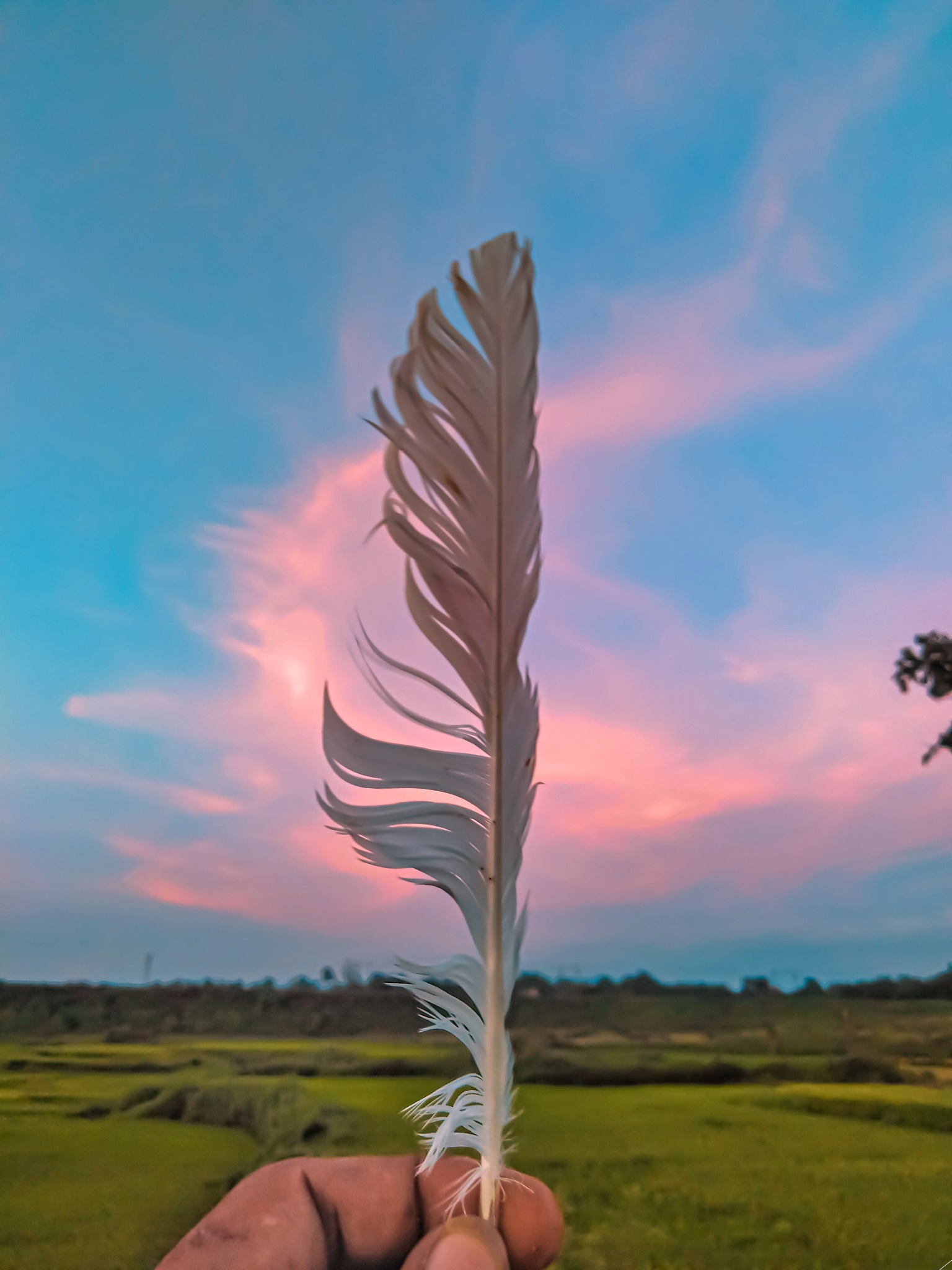 A feather in the hand.