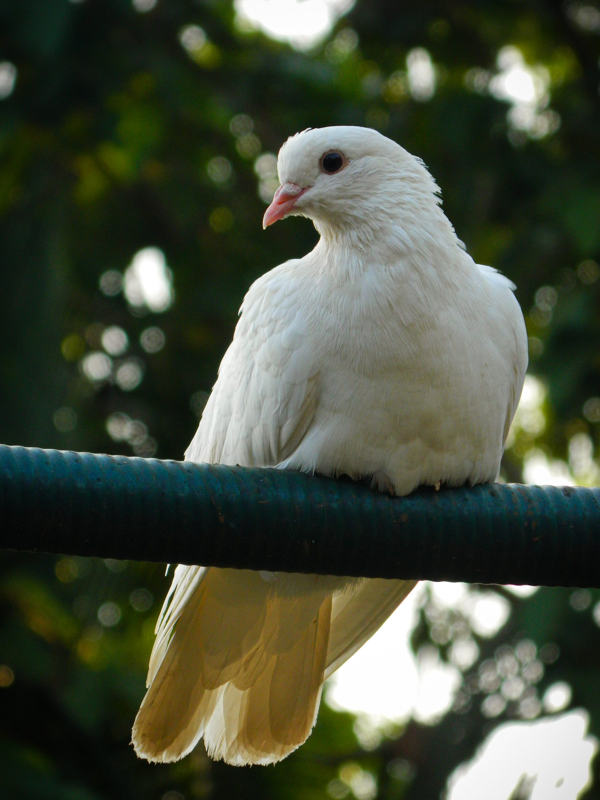 A pigeon sitting on a rope.