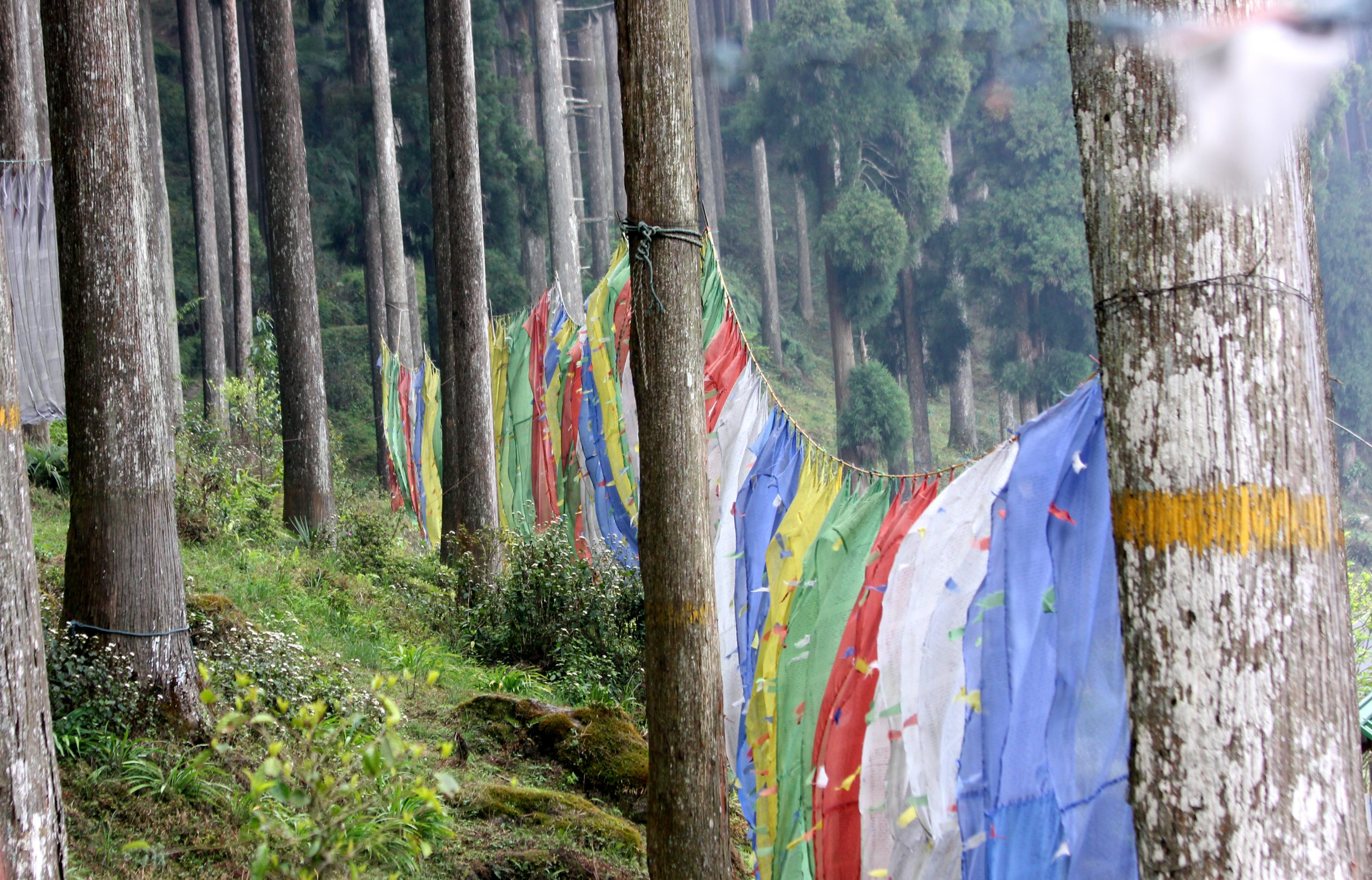 Prayer flags tied on trees
