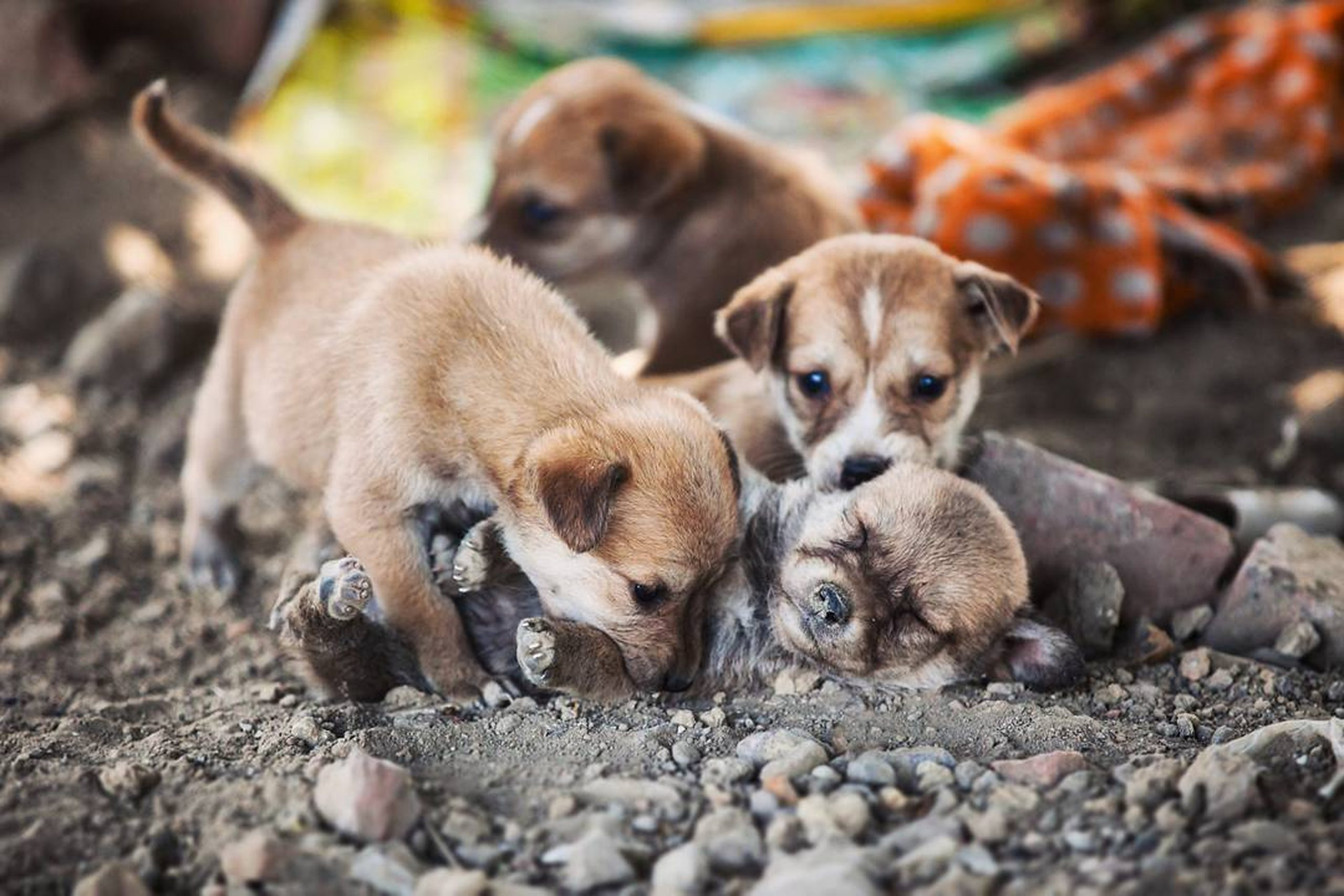 Puppies in the Ground on Focus