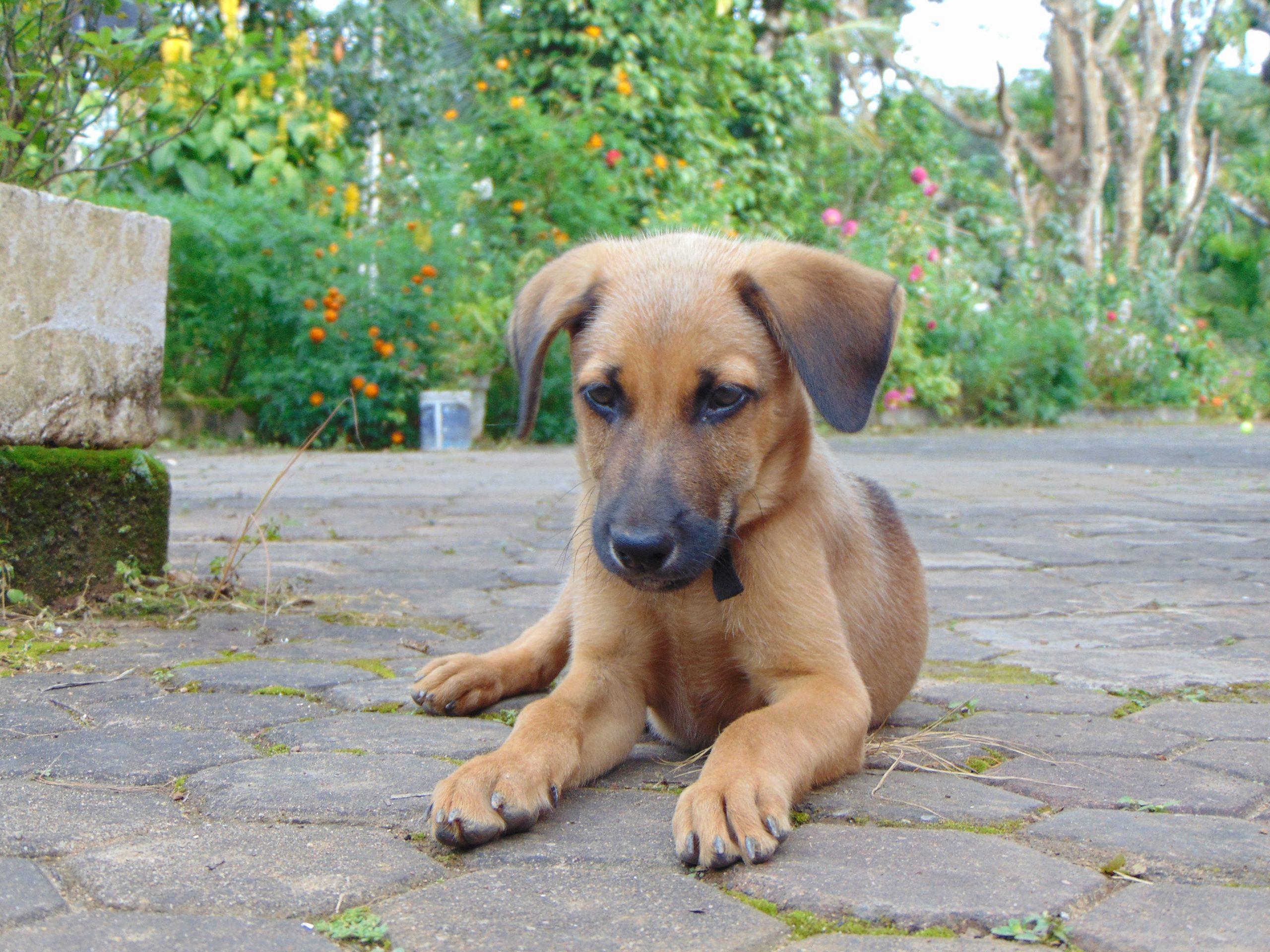 A dog sitting quietly