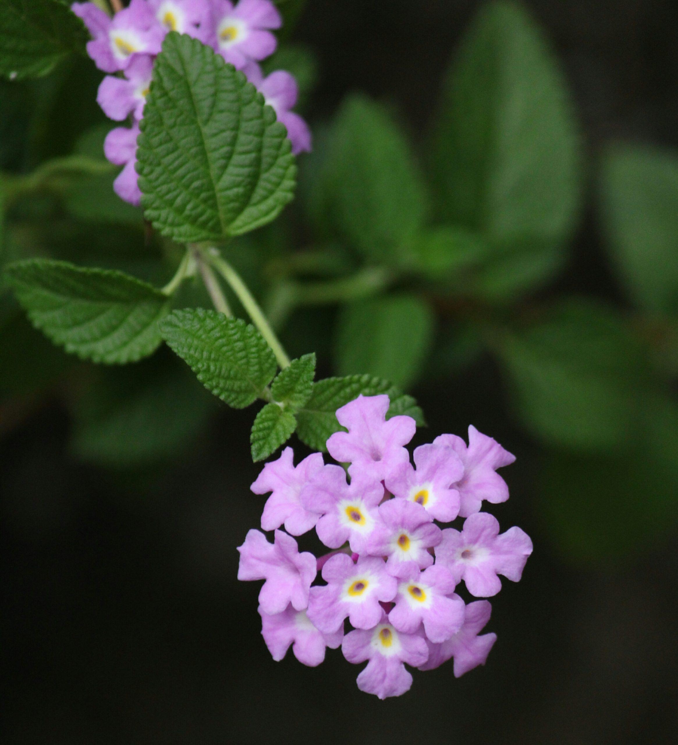 Purple Flowers on Focus