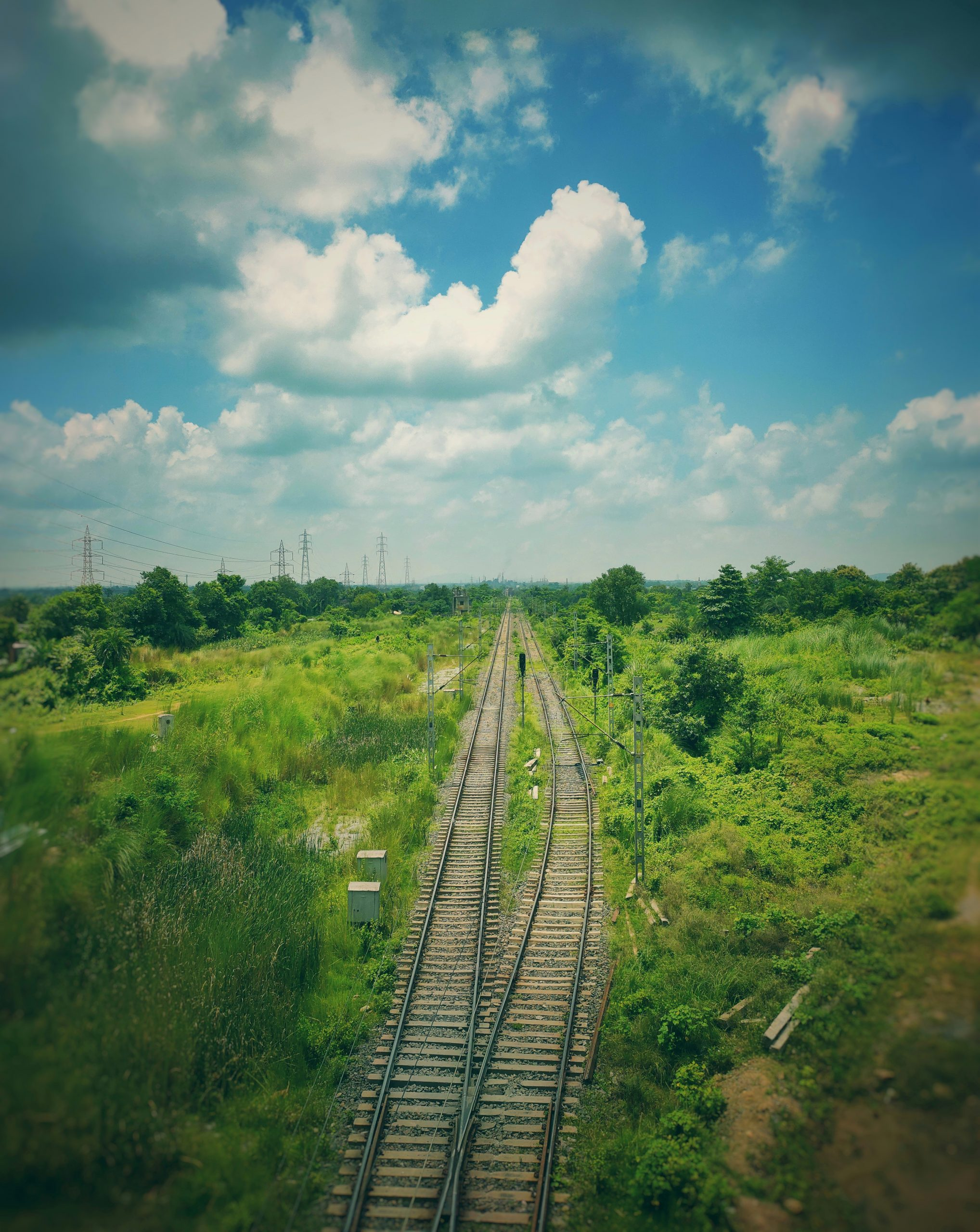Railroads surrounded by plants