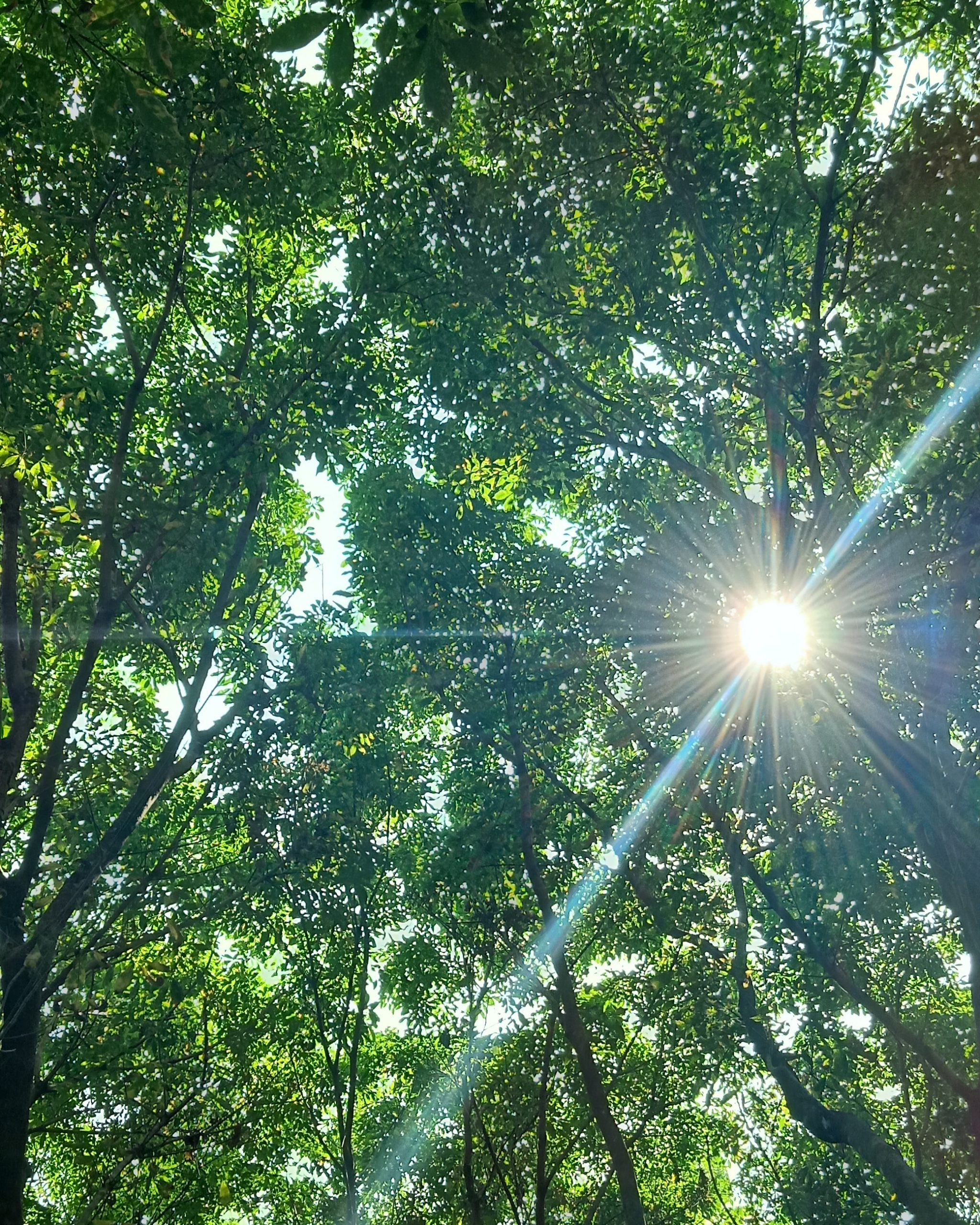 sun shining behind leaves