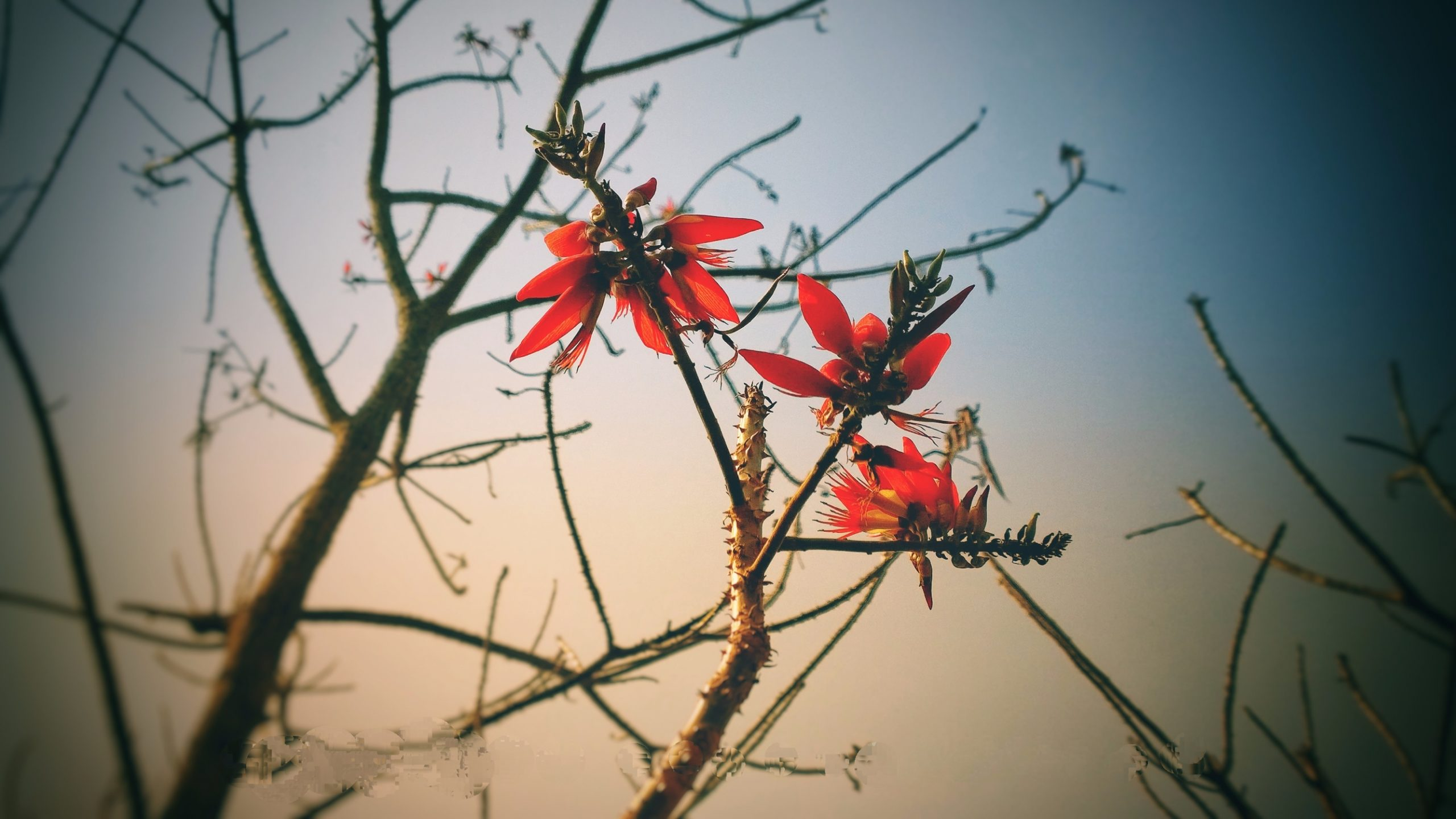 Red Flowers on the Tree