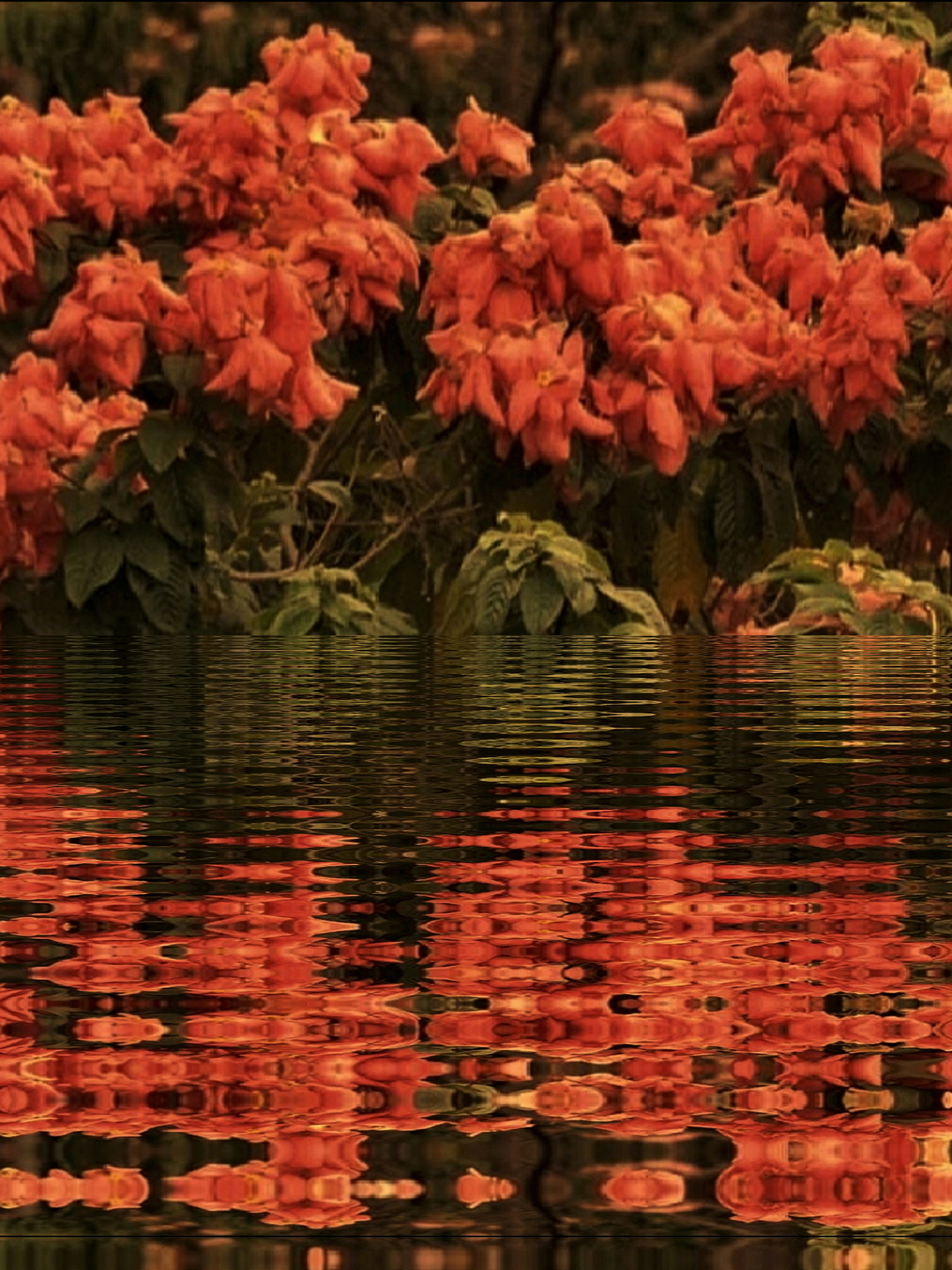 Reflection Of Flowers in the water, Nature Park Mumbai