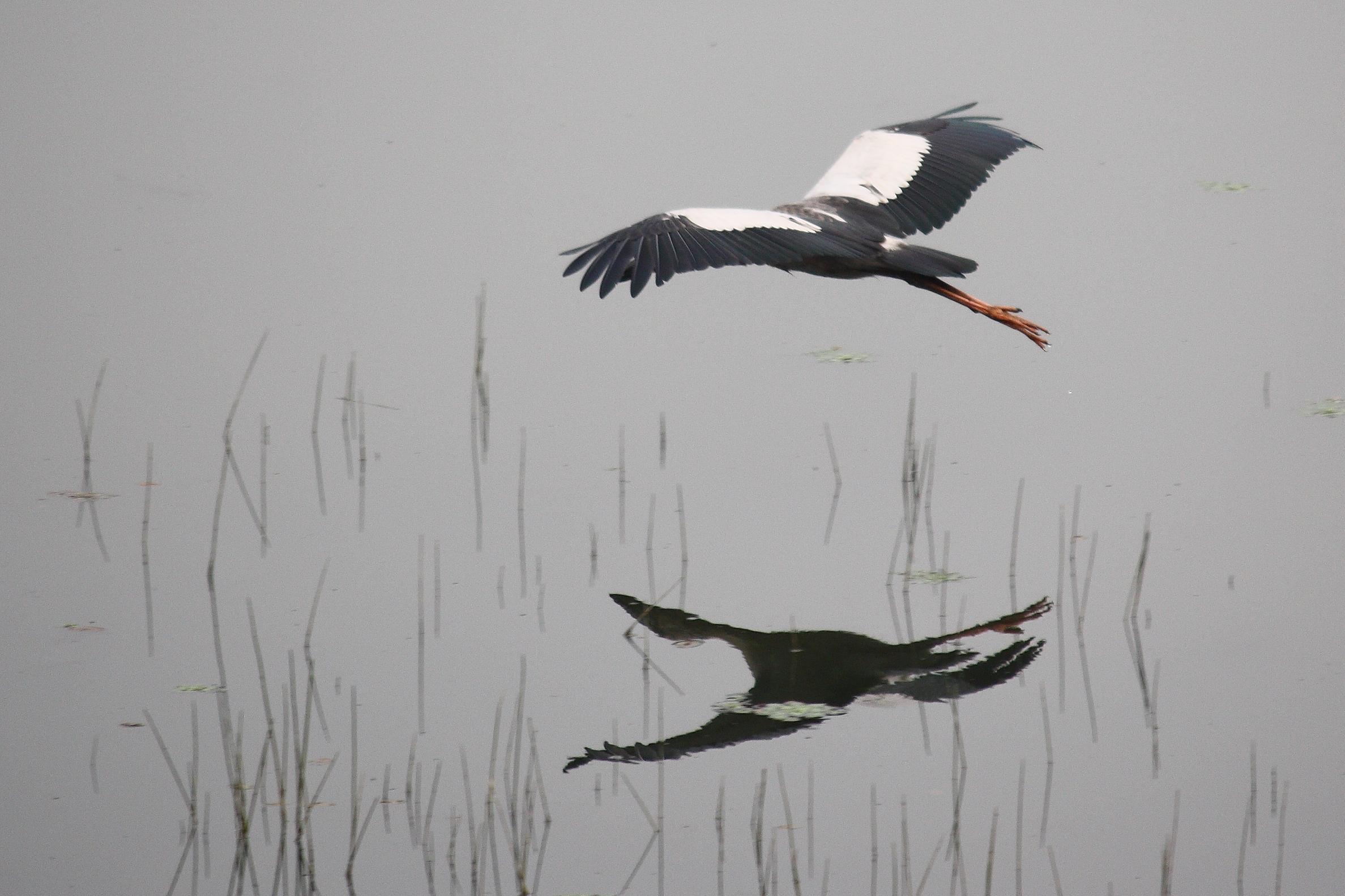 Reflection of flying bird