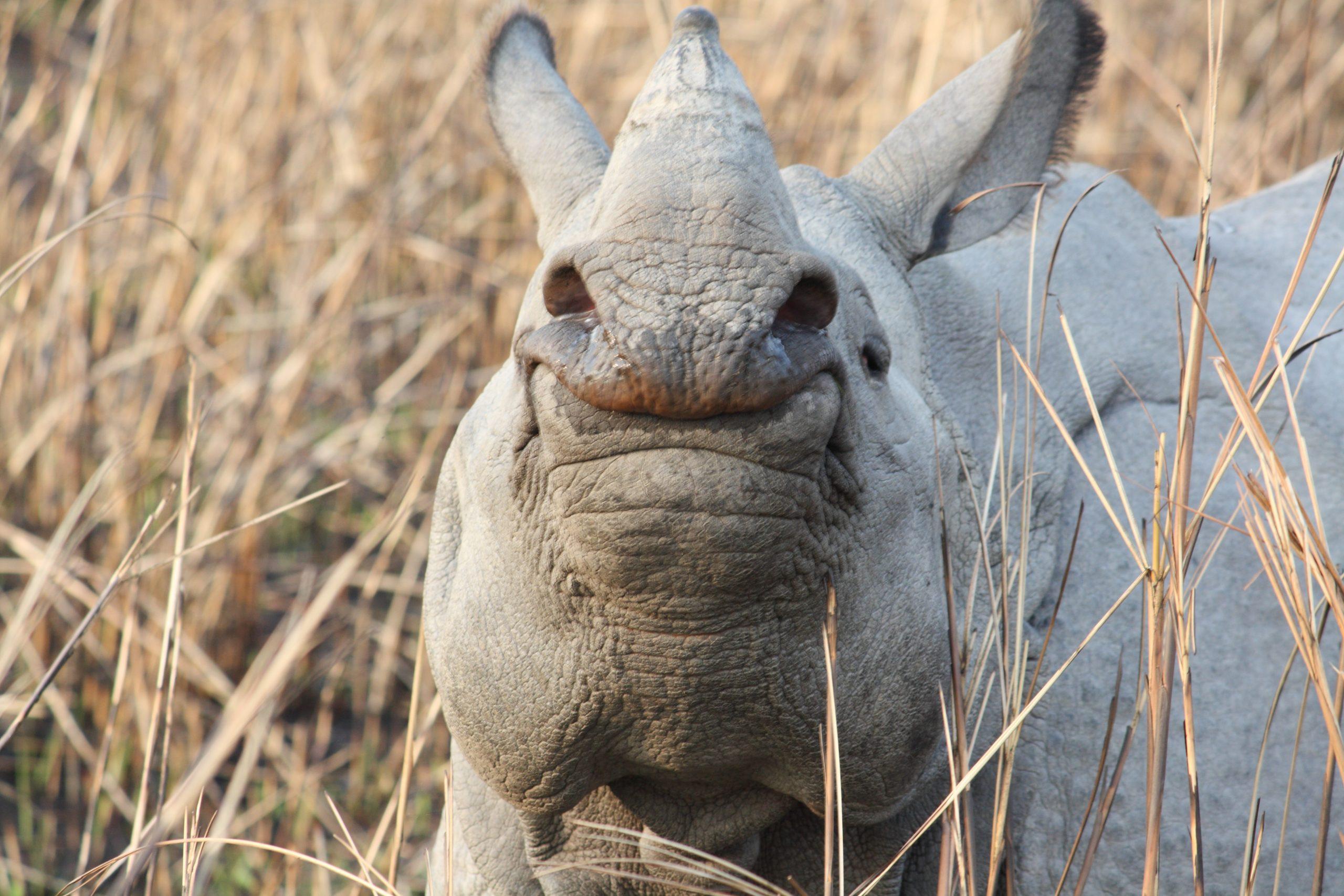 closeup of a rhino