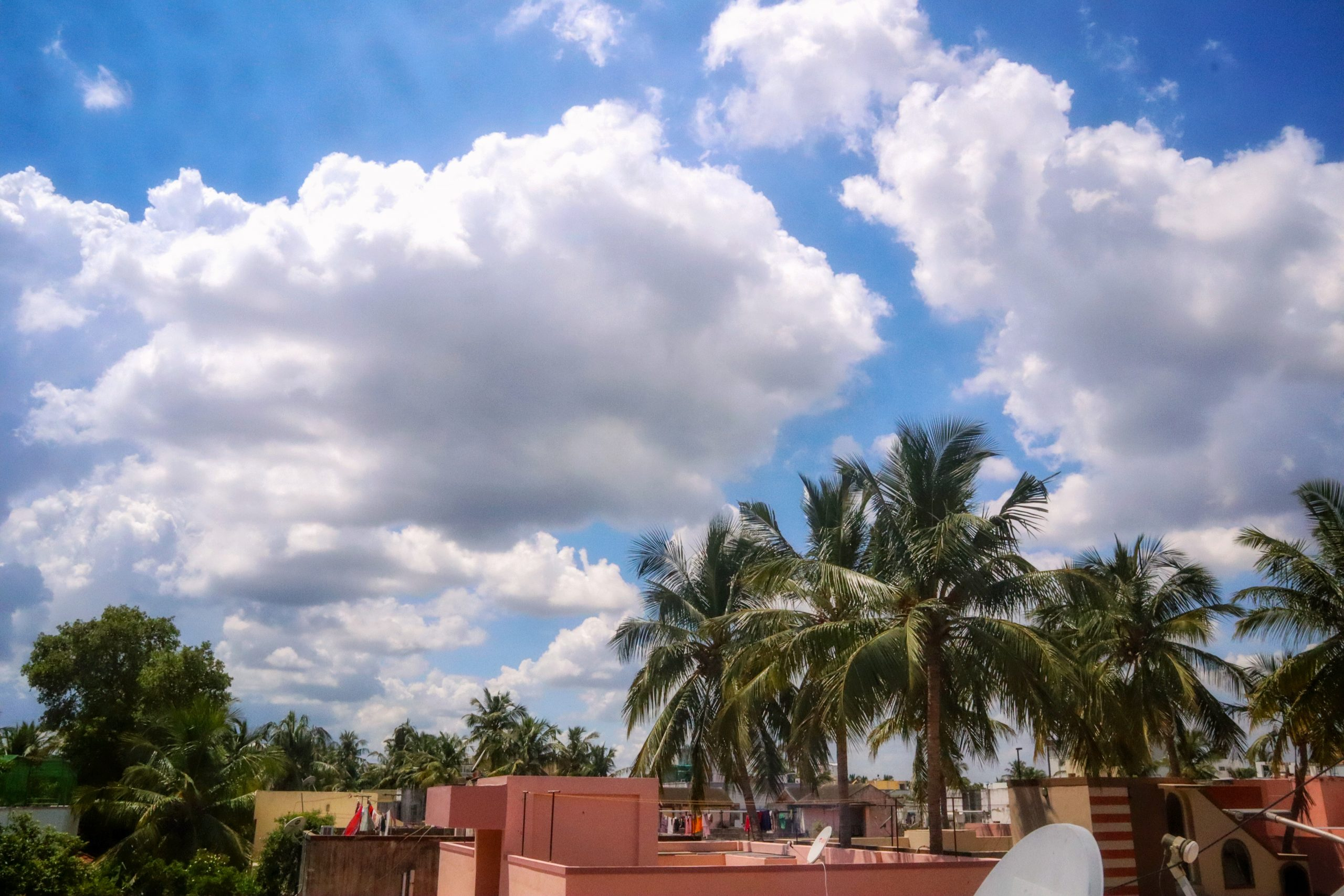 Rooftops and palm trees