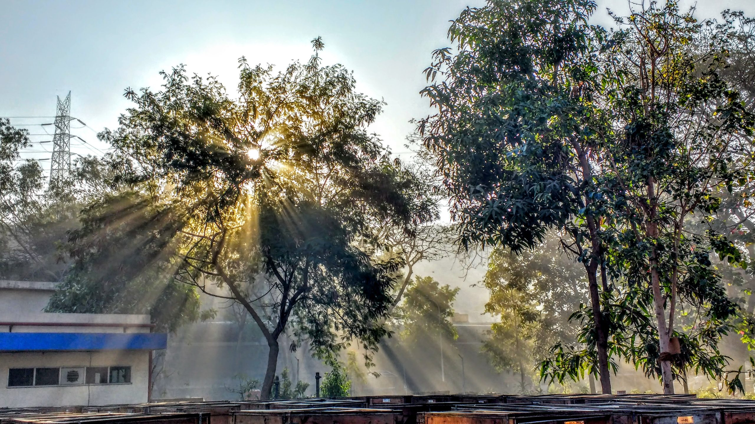 Sunlight Shines Through Tree