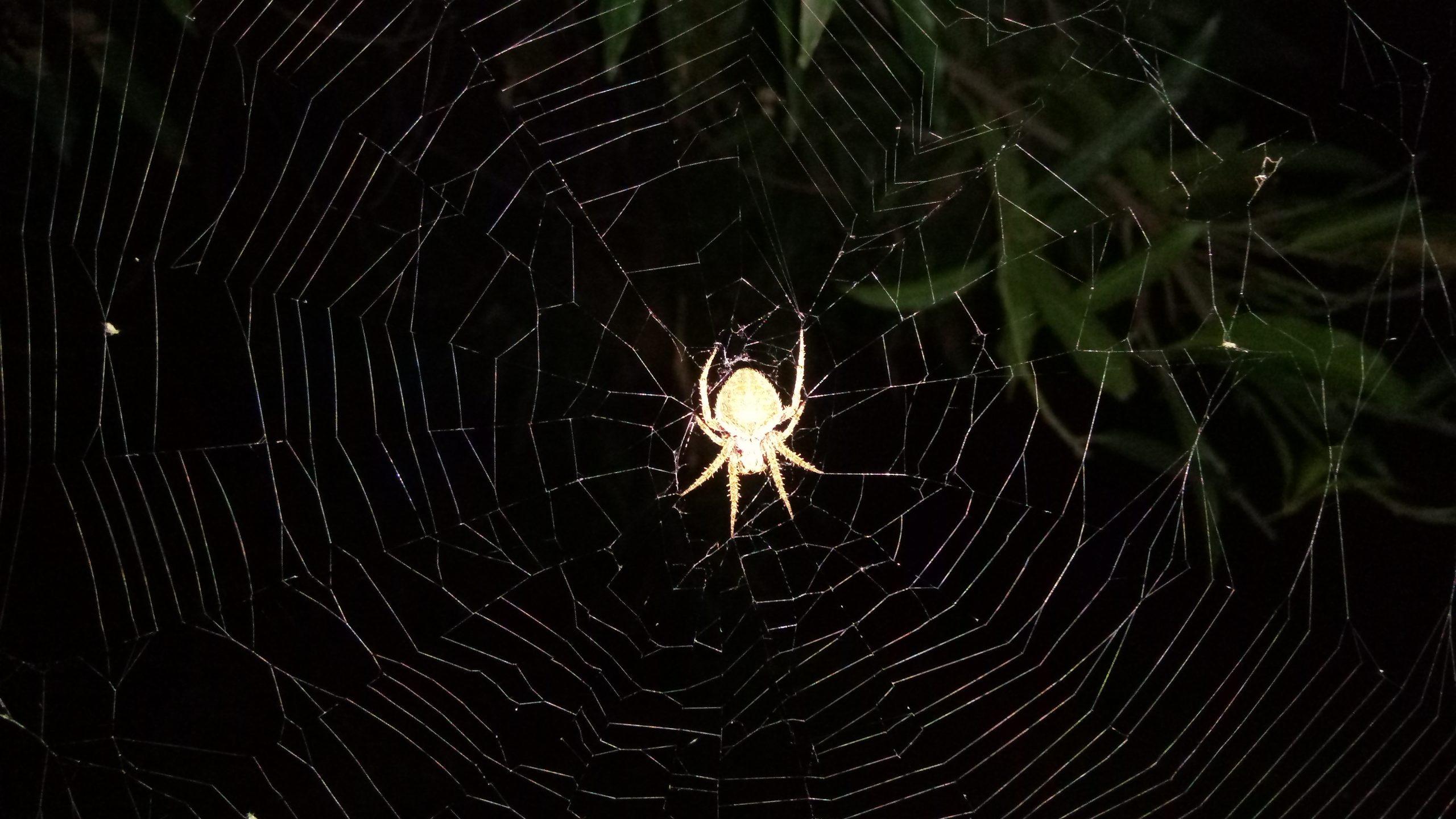 Spider Web on Focus