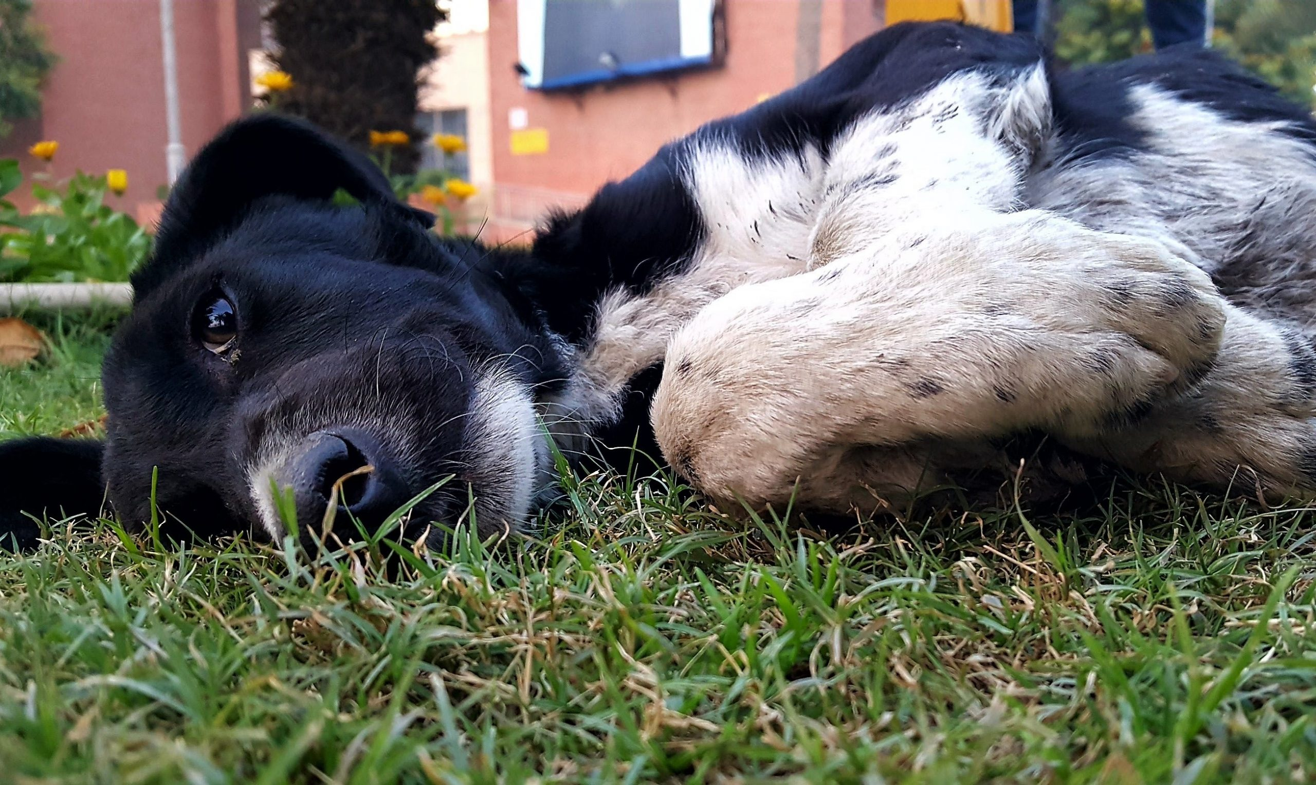 Street dog lying on grass