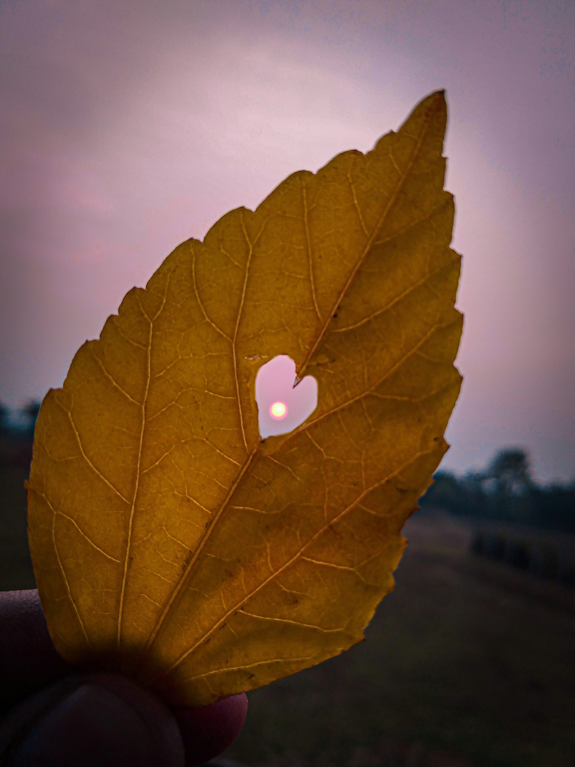 Sun Inside Heart