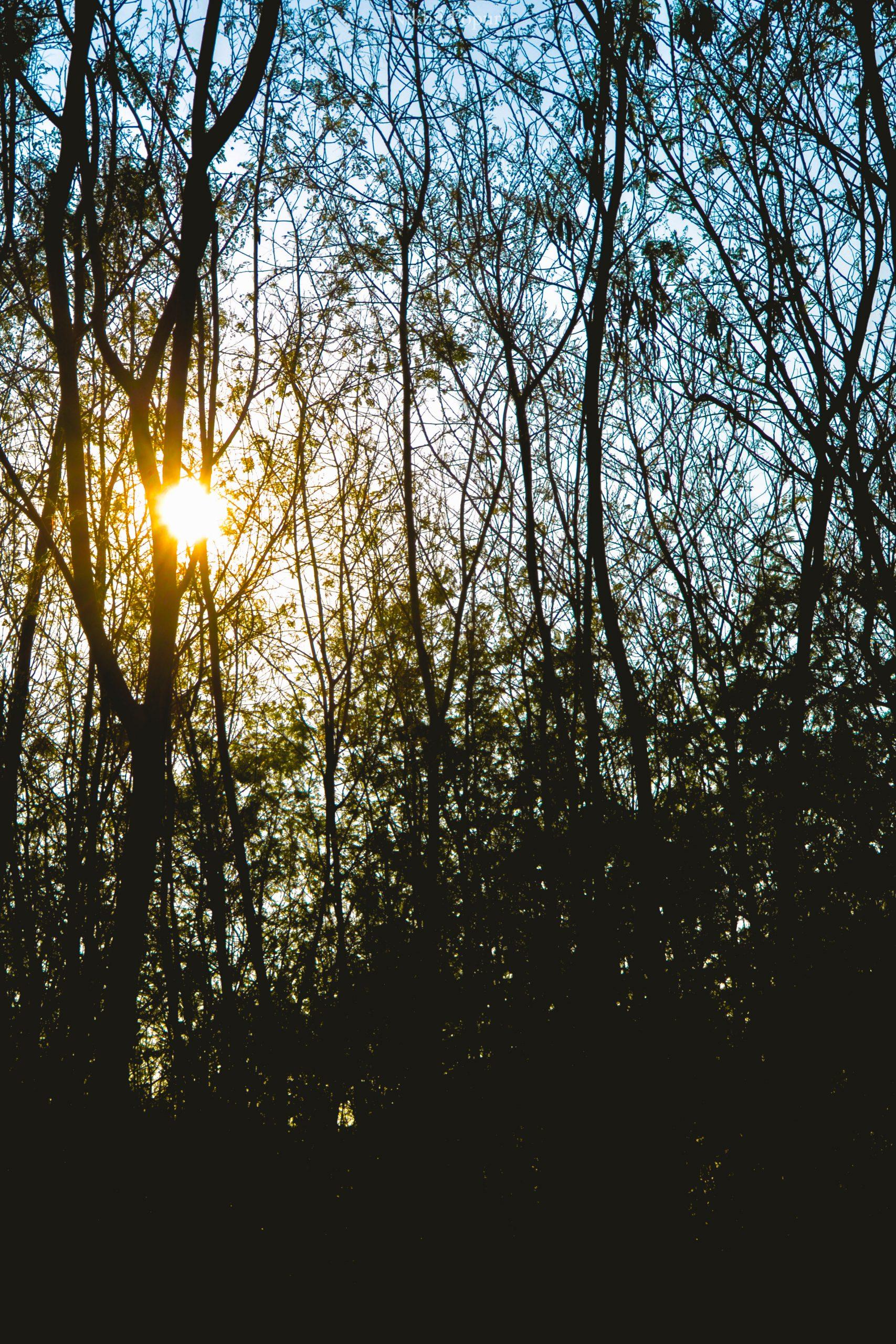 Sun shine through trees