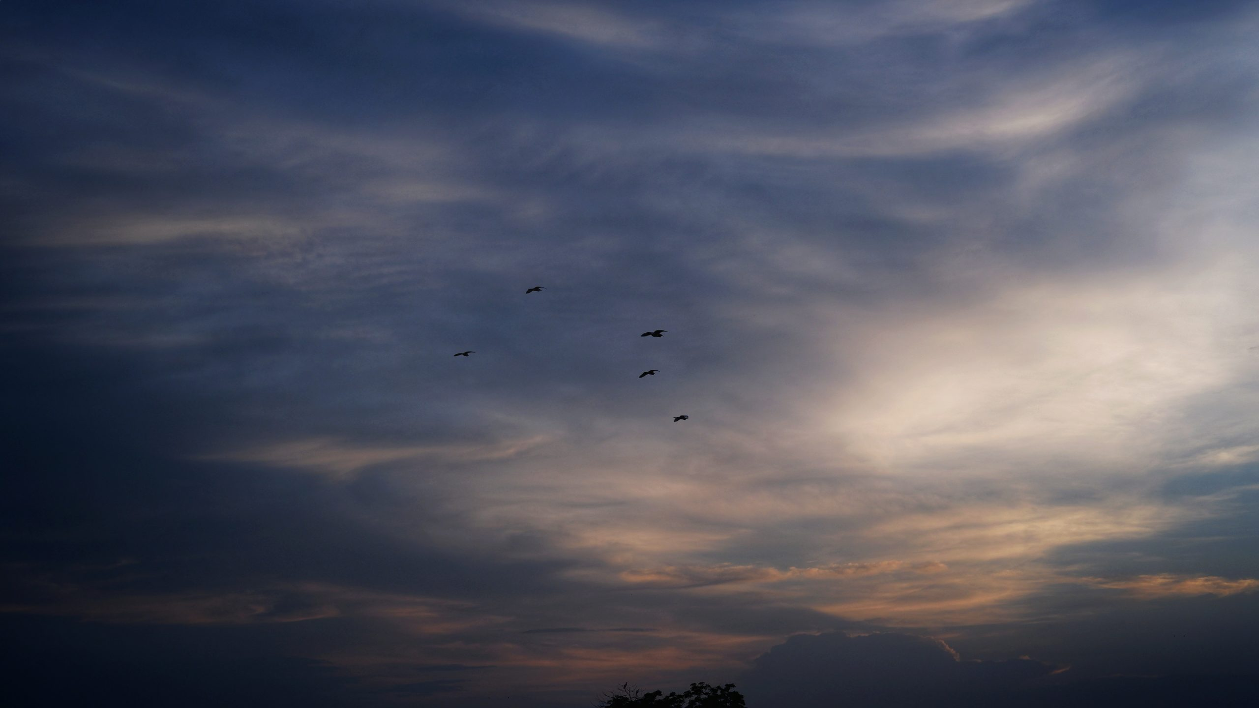 birds flying high in the sky