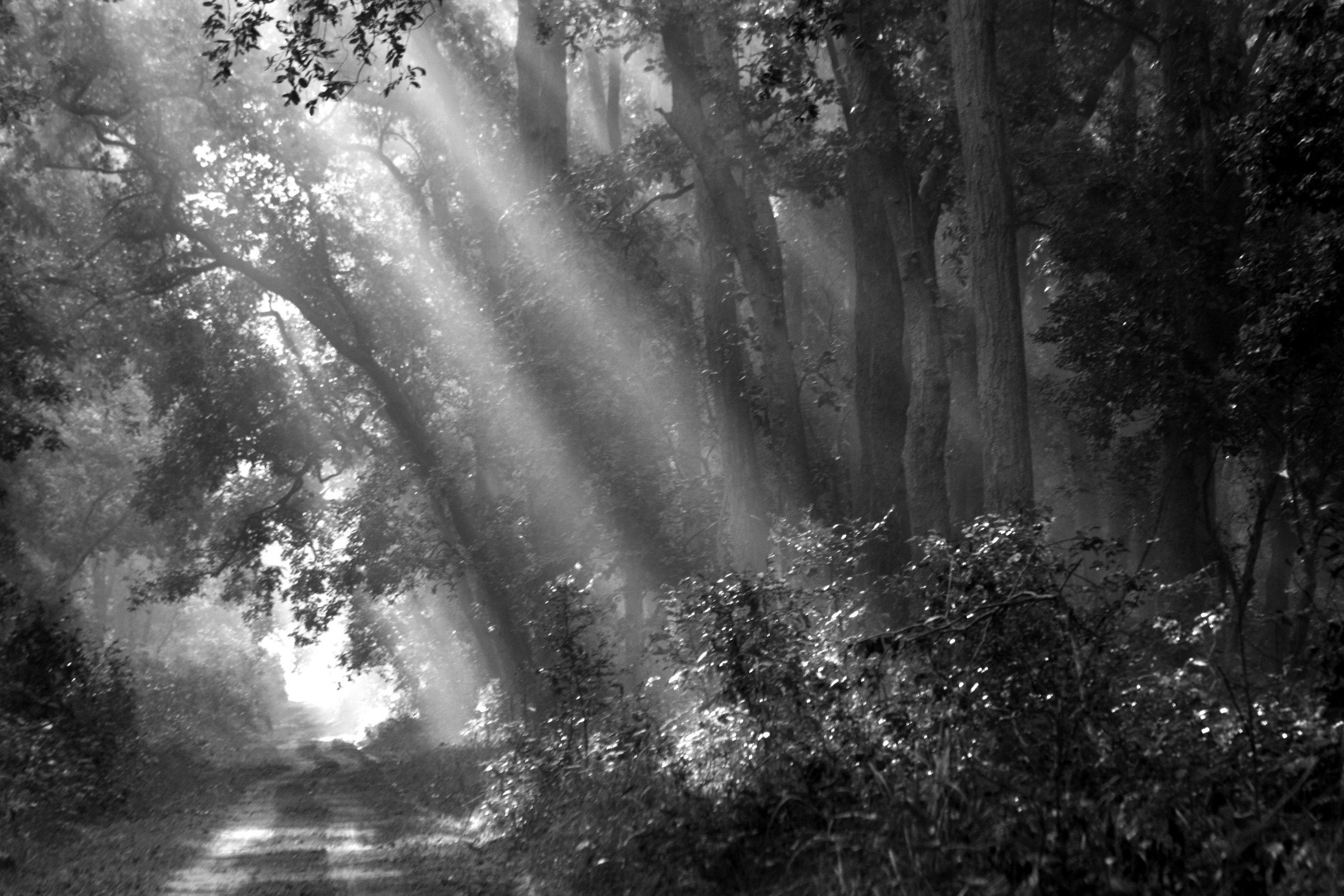 Sunrays falling through trees