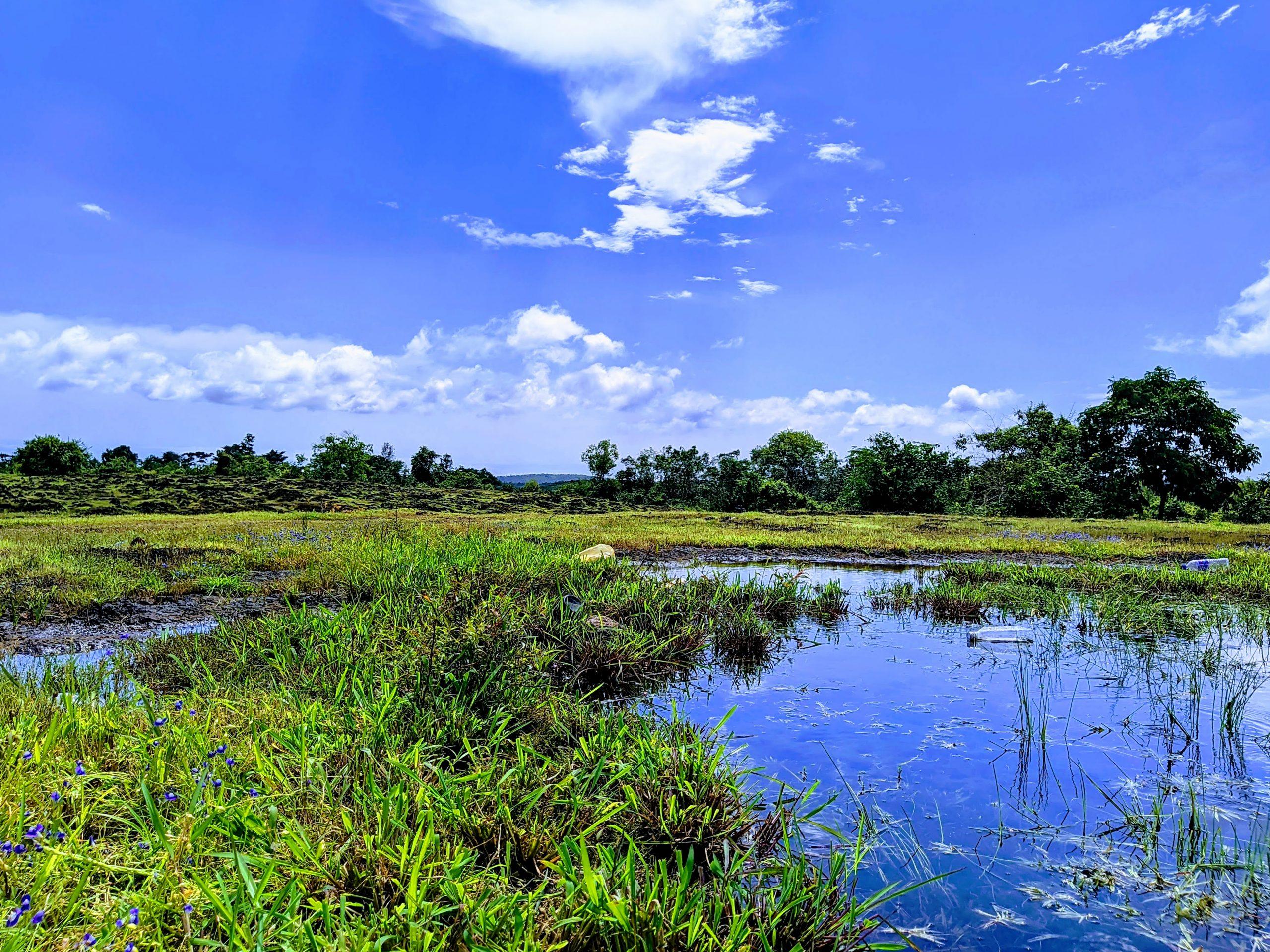 Swamp in a Plain