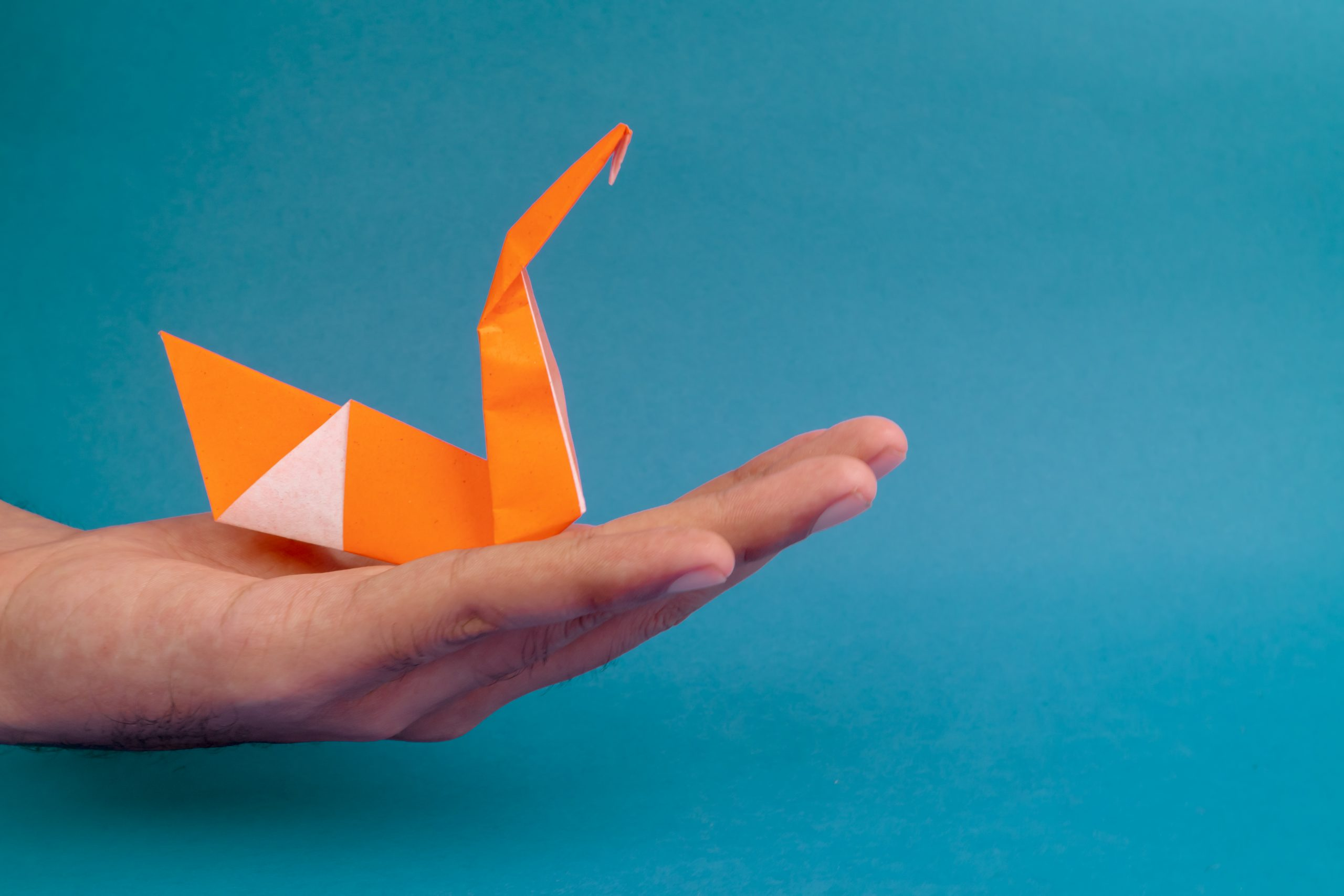 Swan origami on hand