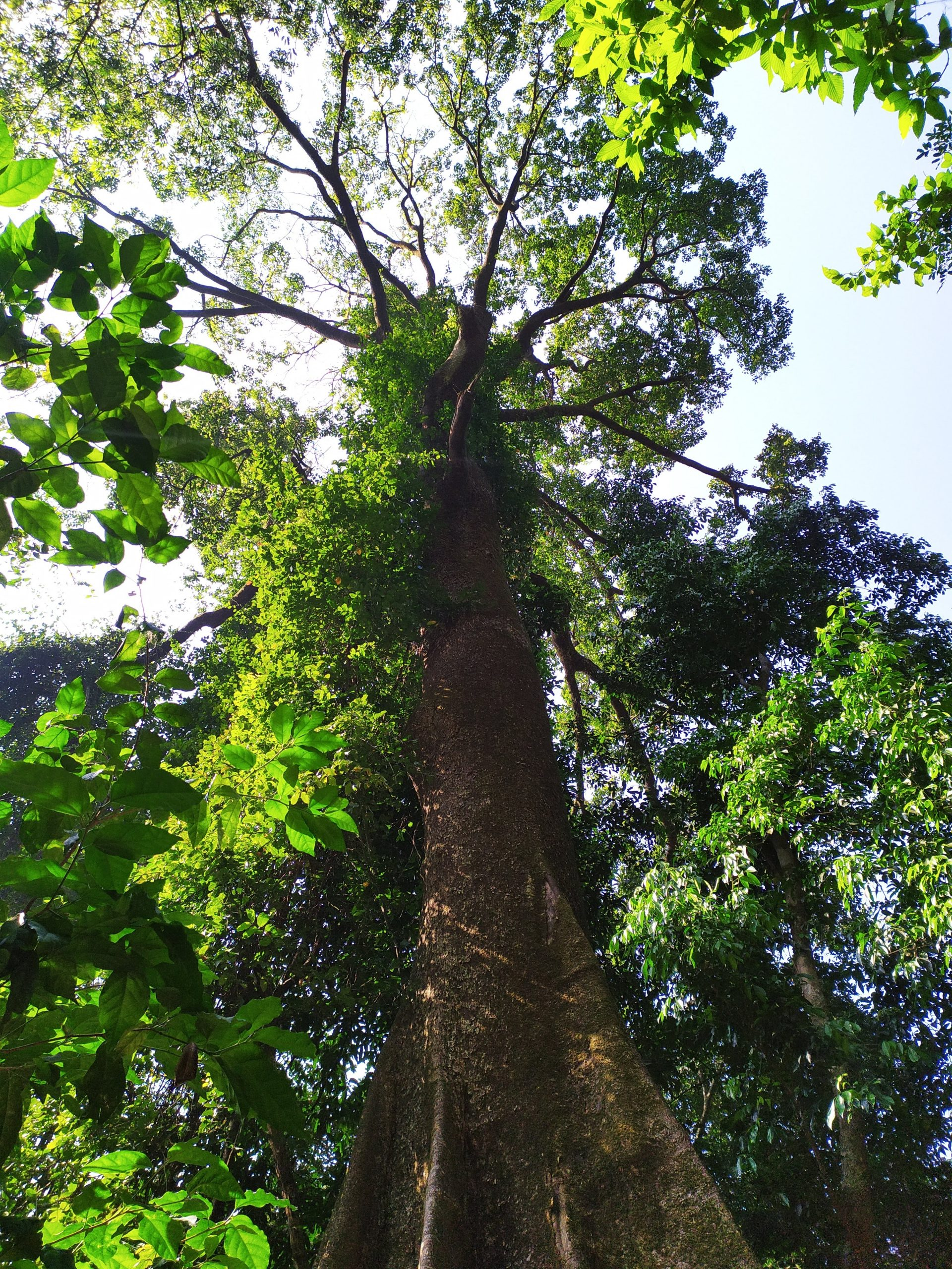 A tall tree with many branches
