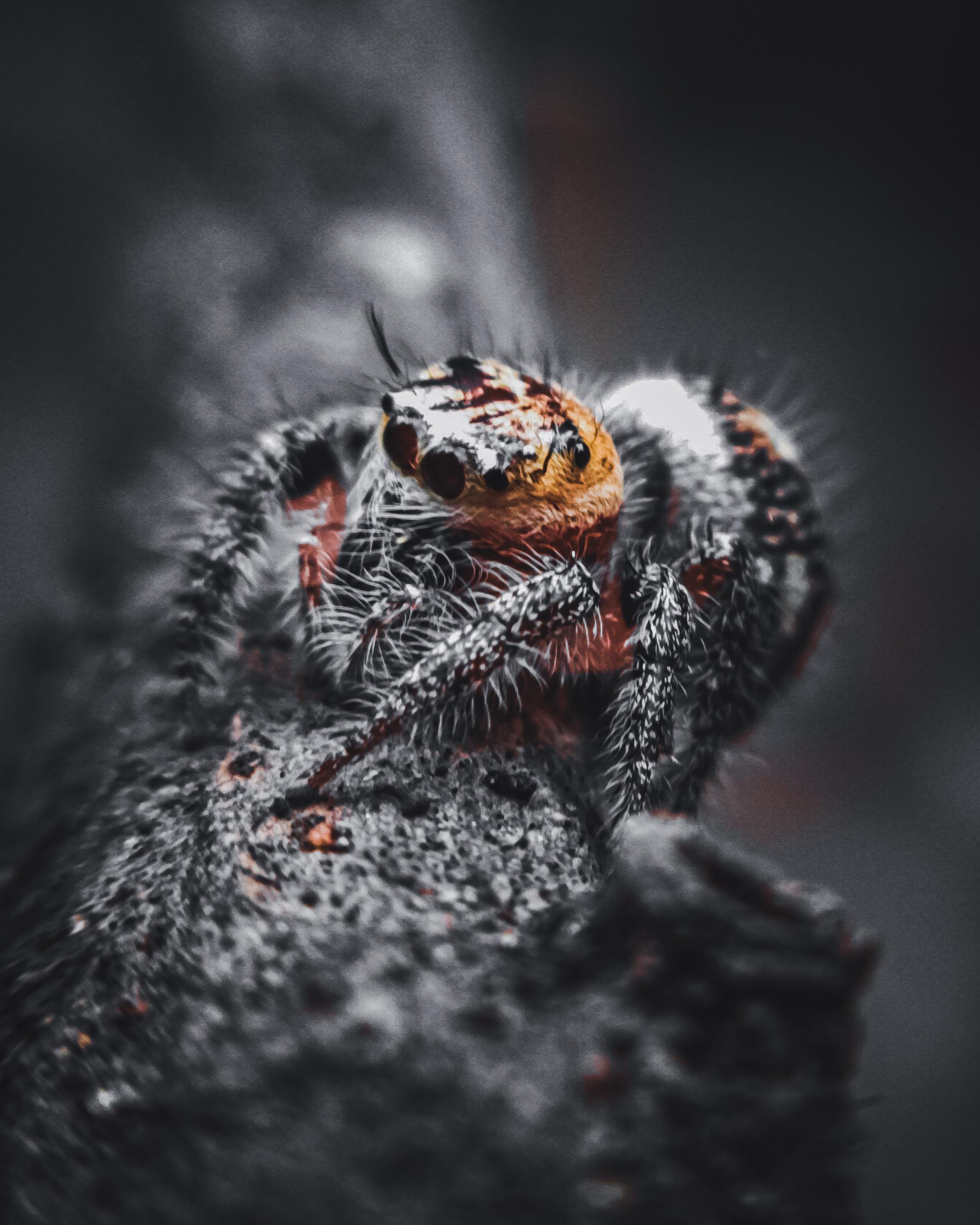 Tarantula Close-up