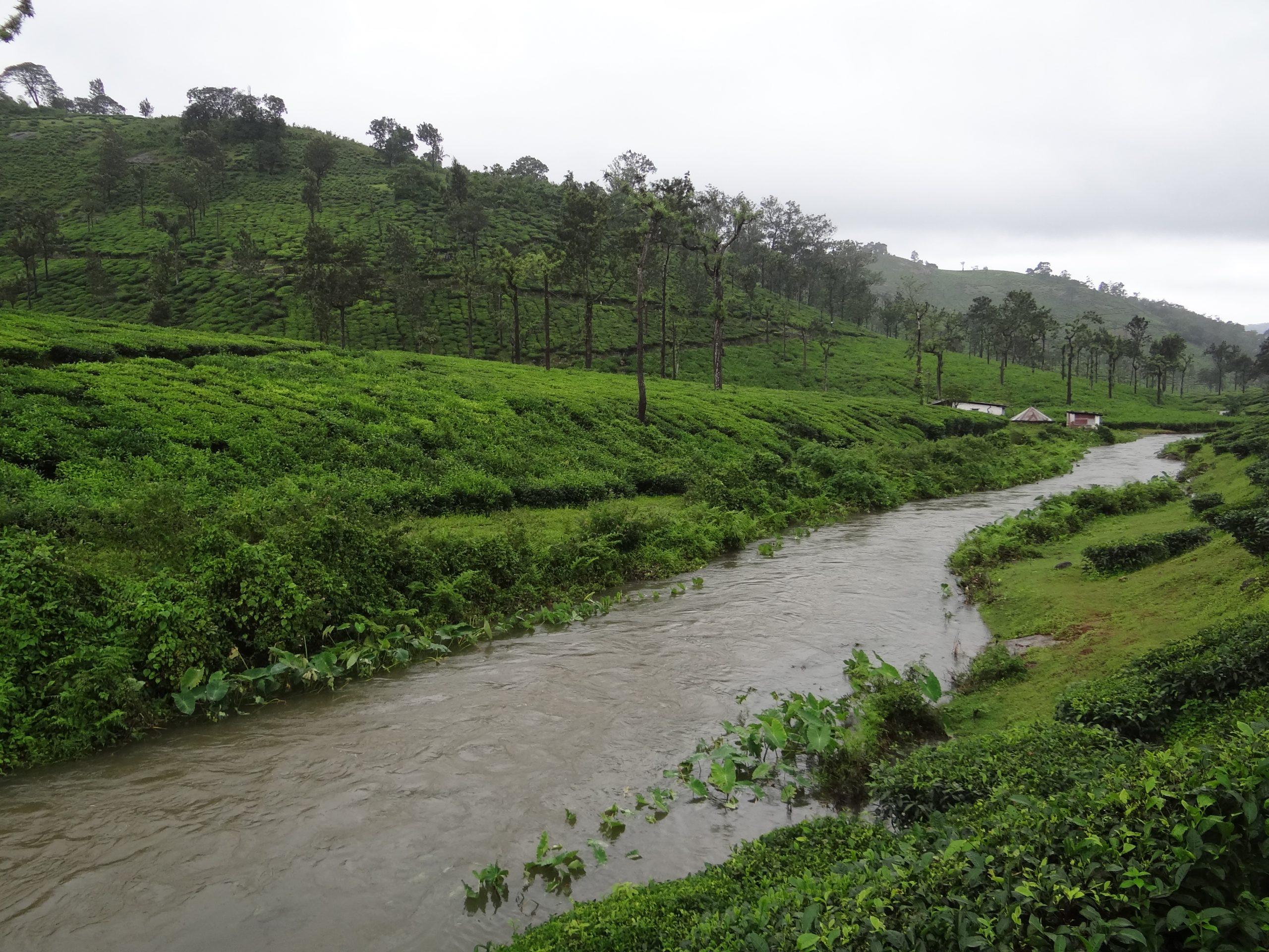 tea plantations on hills