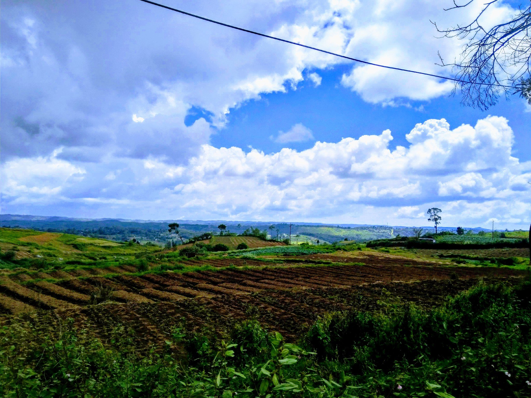 Tea plantation in Shillong