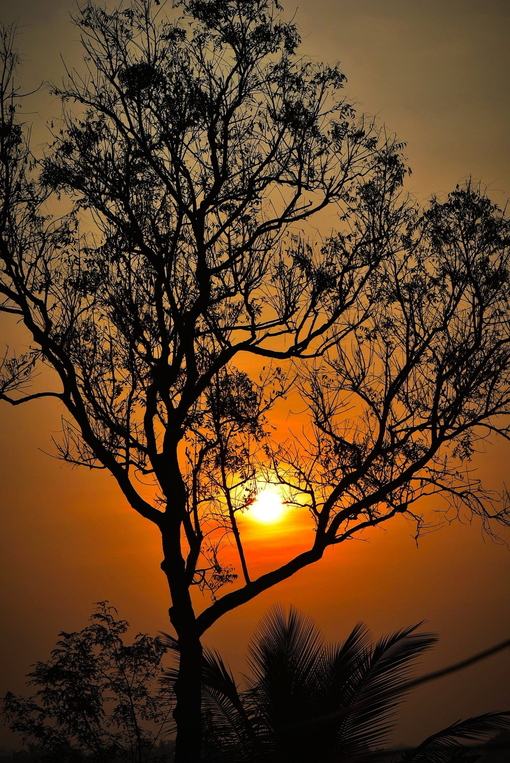 The marvelous sunrise