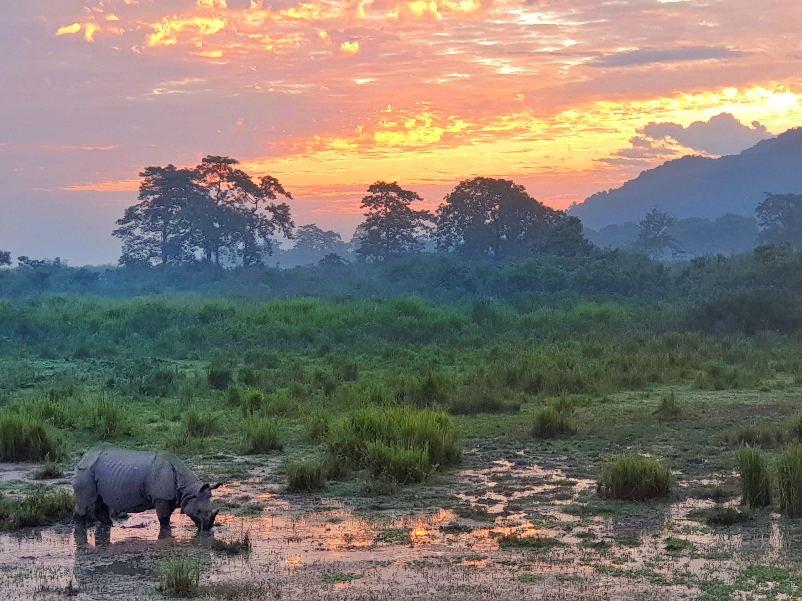 One Horned Rhino in Kaziranga national park.