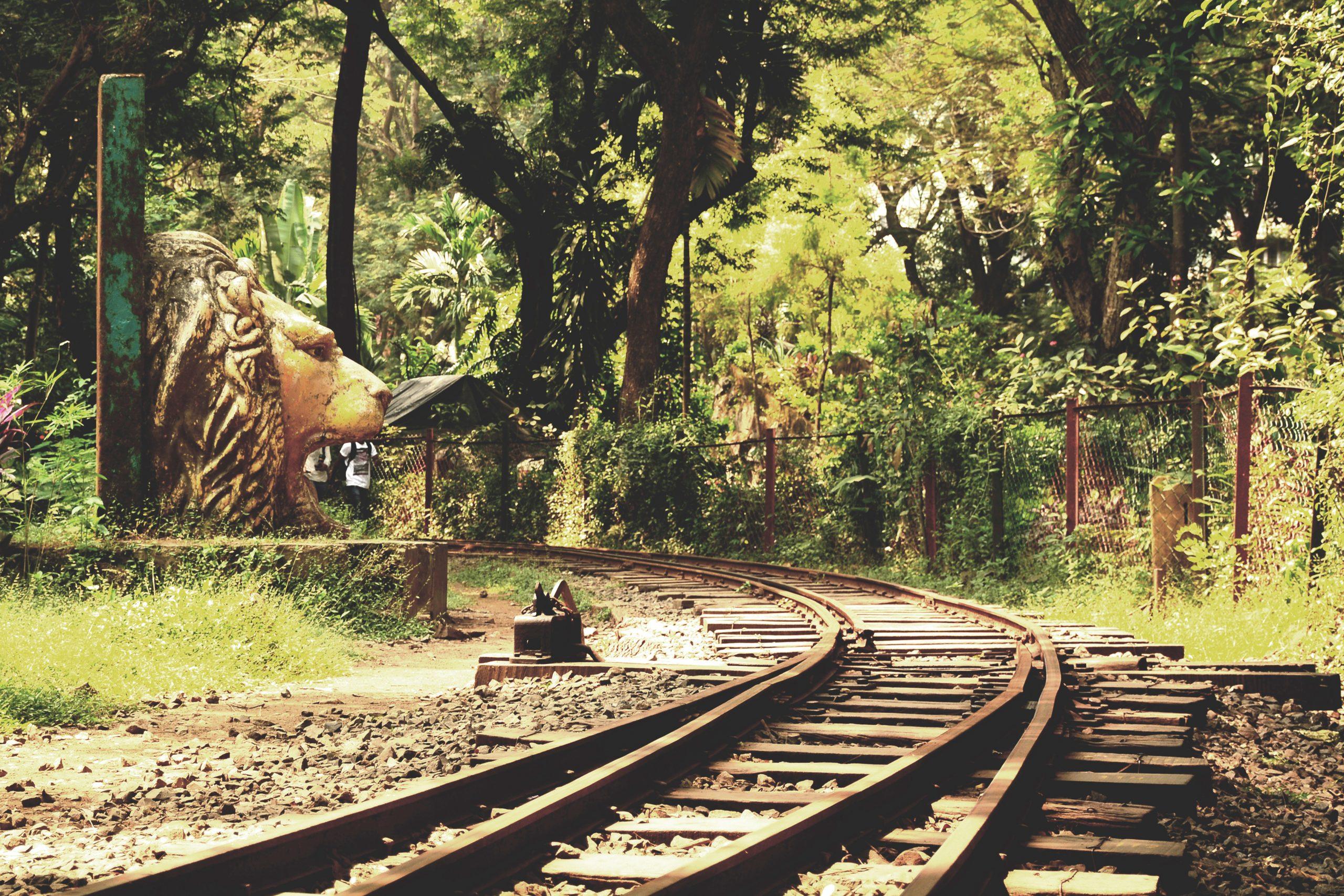 Toy Train Track, Sanjay Gandhi National Park