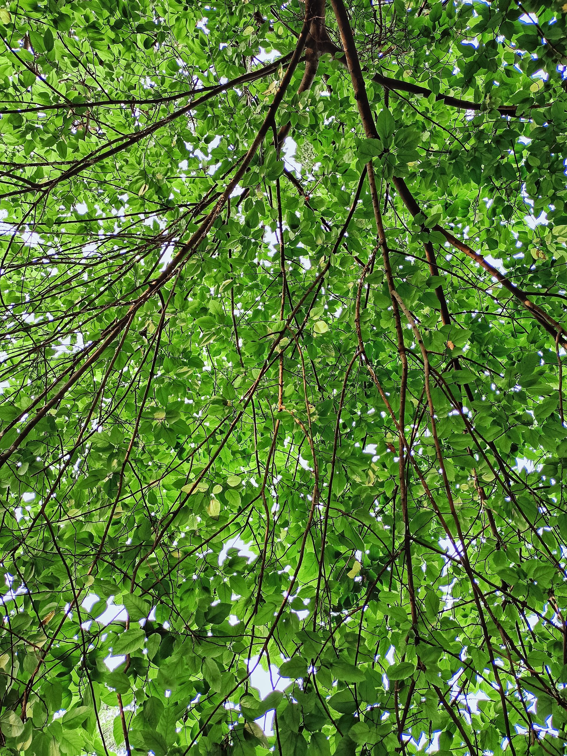 Tree Leaves and Twigs