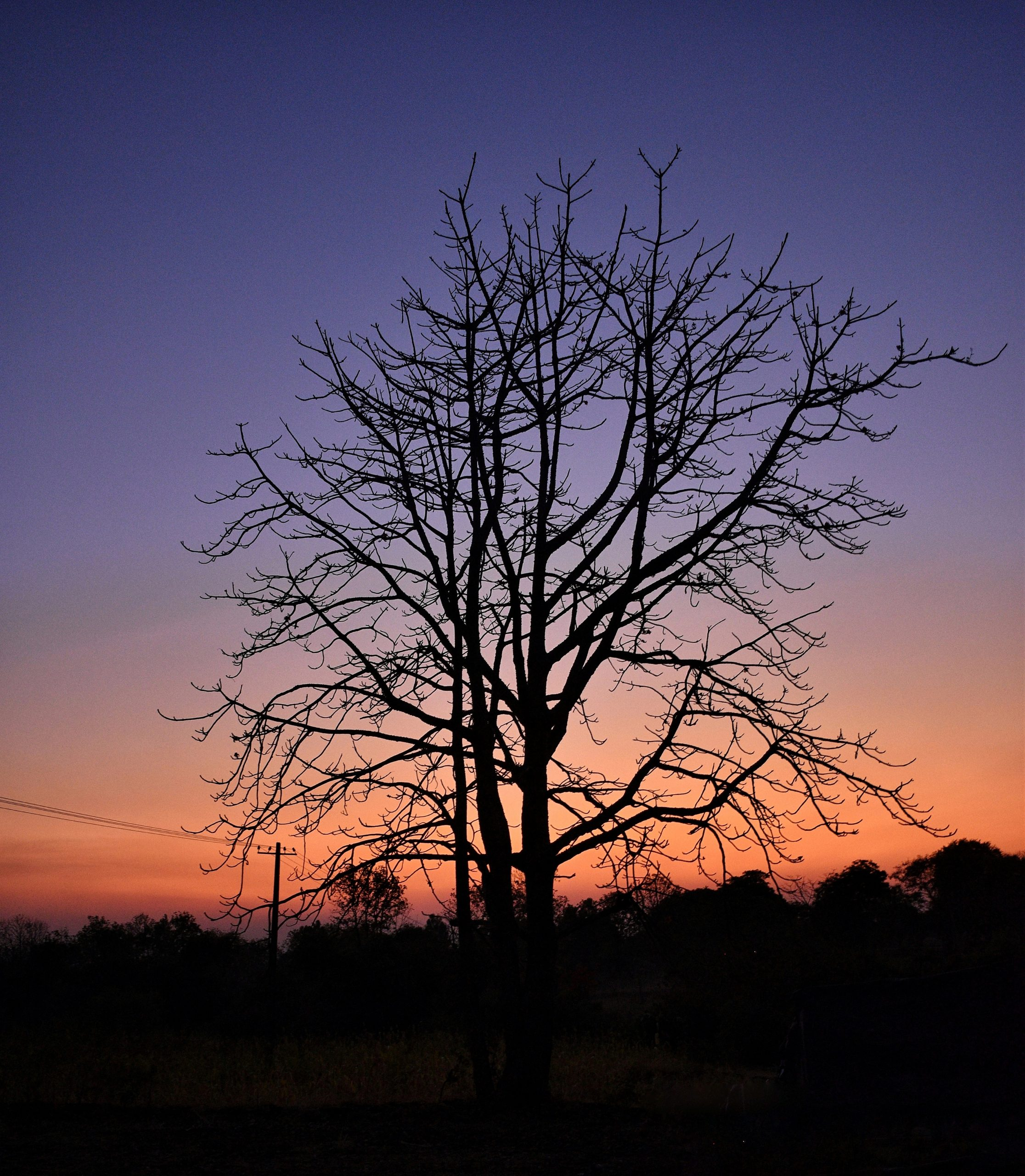 Tree Silhouette on Evening sunset