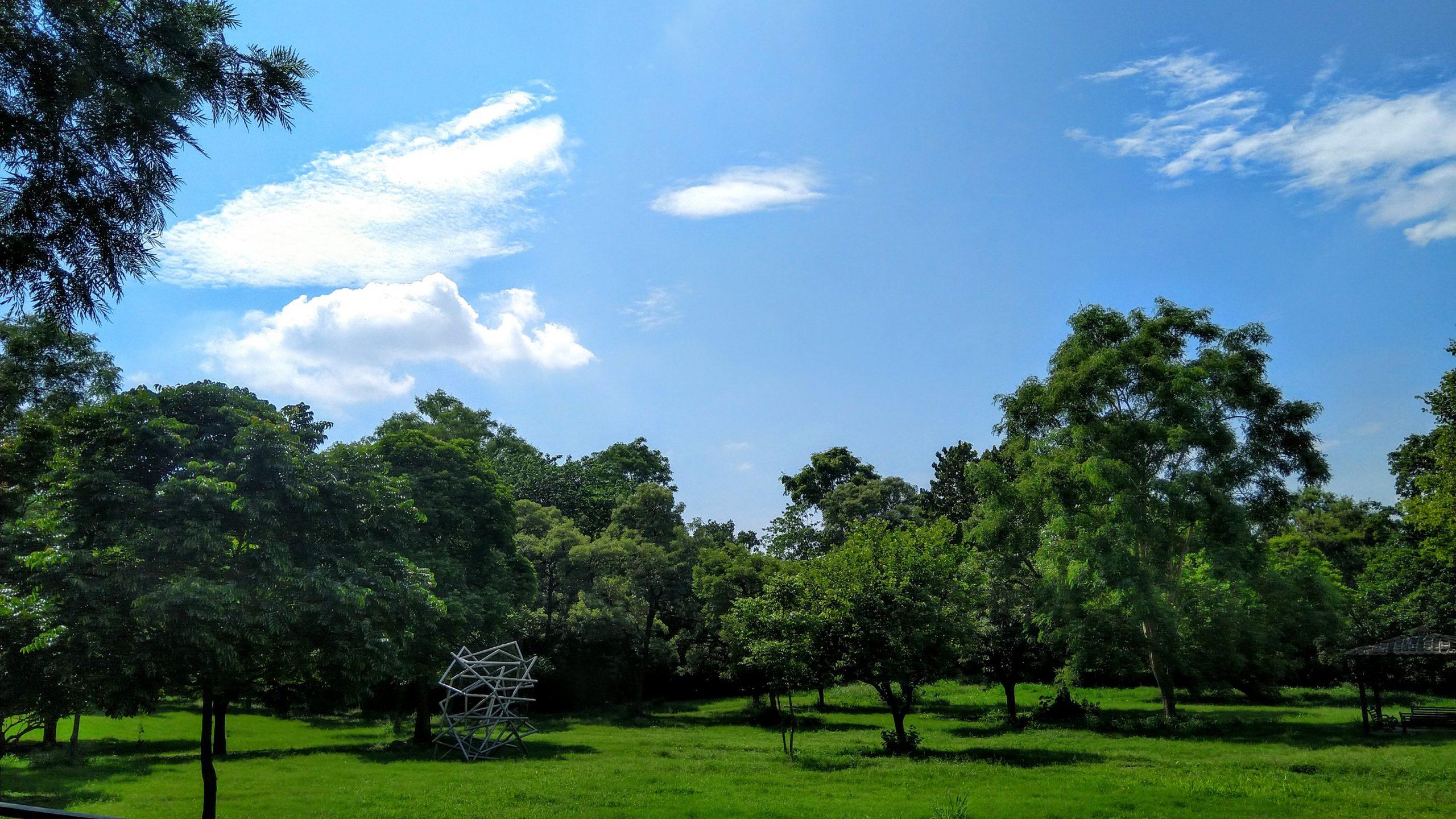 Trees Farm