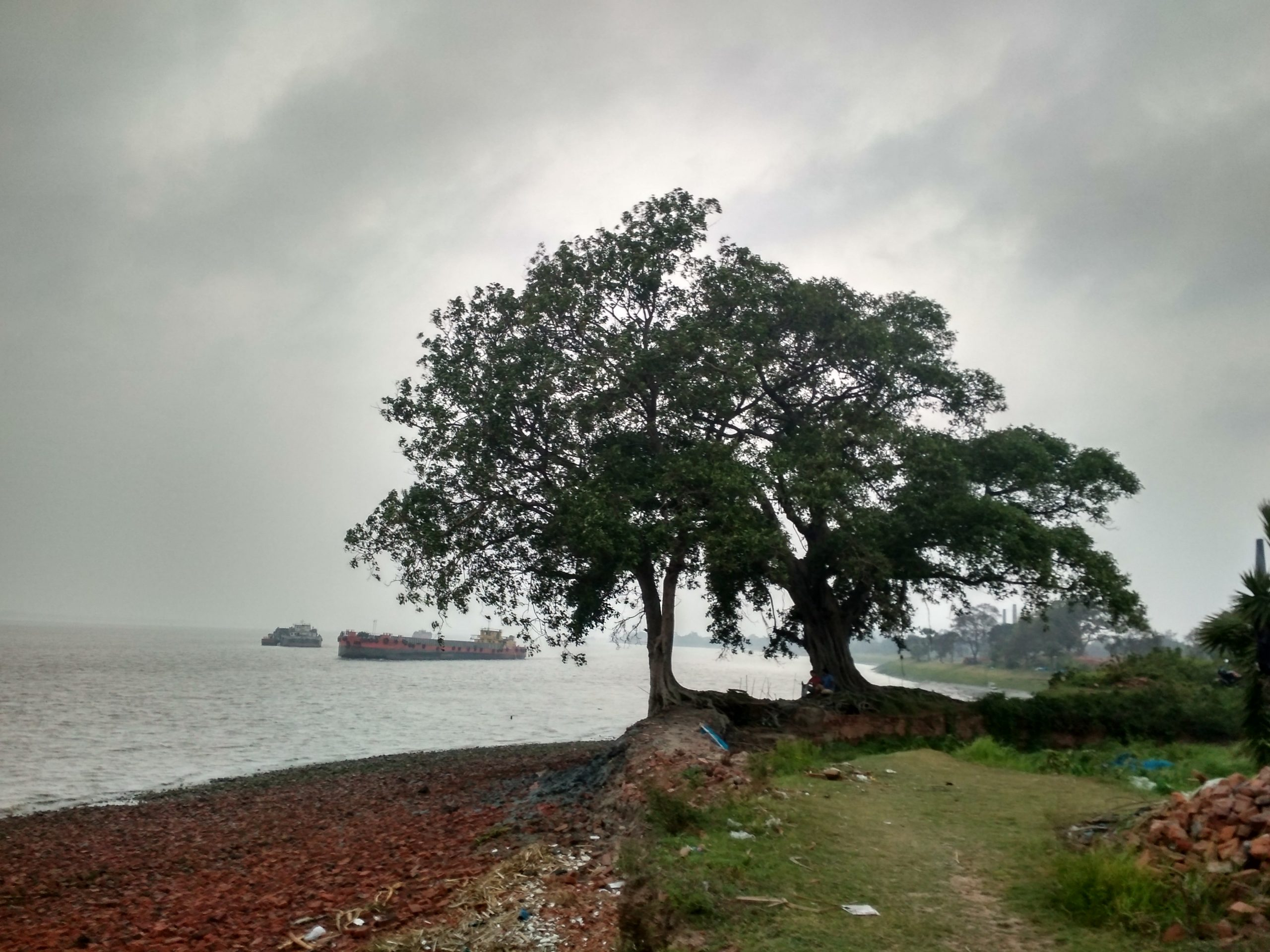 Trees beside Hooghly river