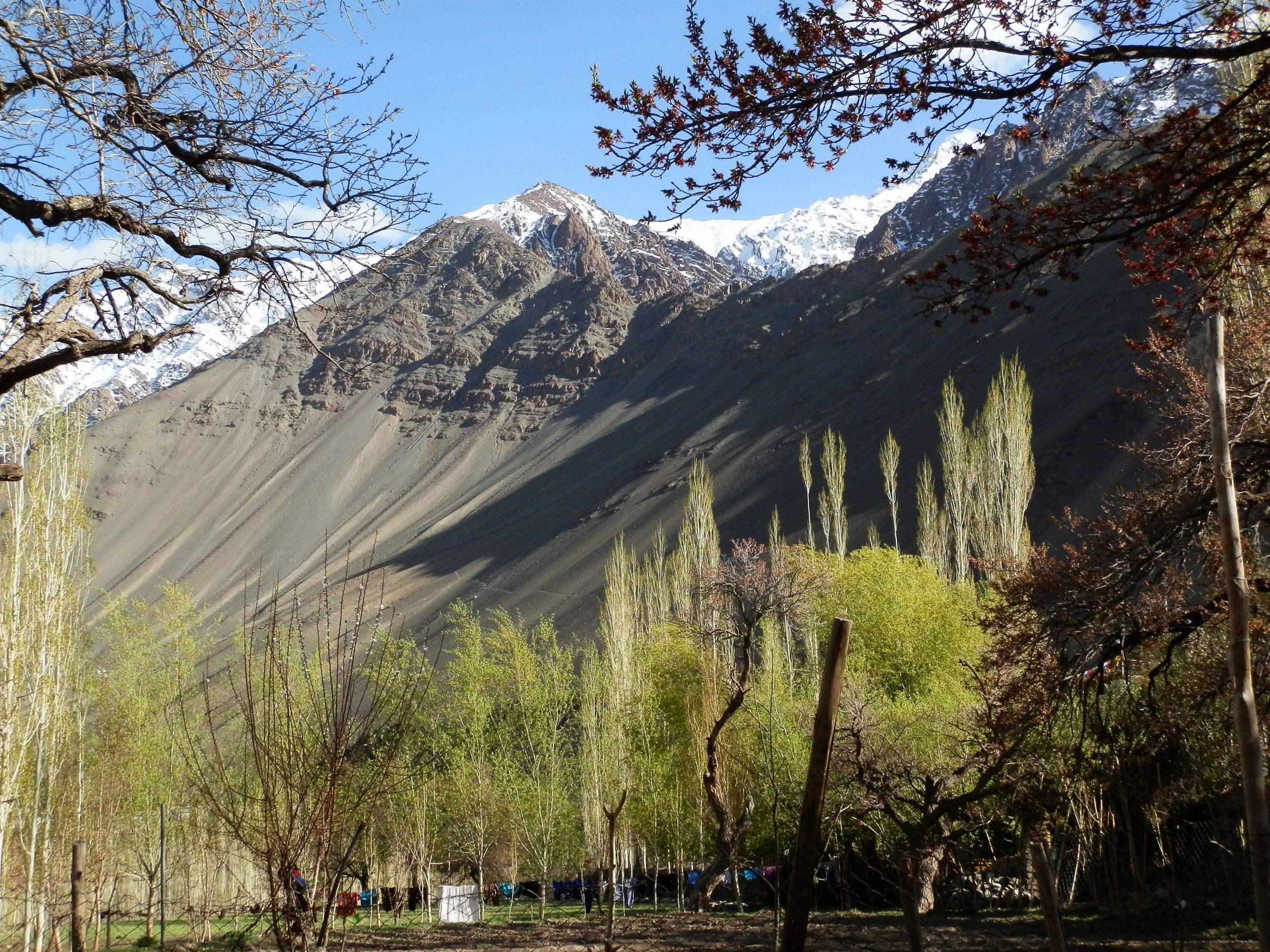 Trees under Leh Mountains