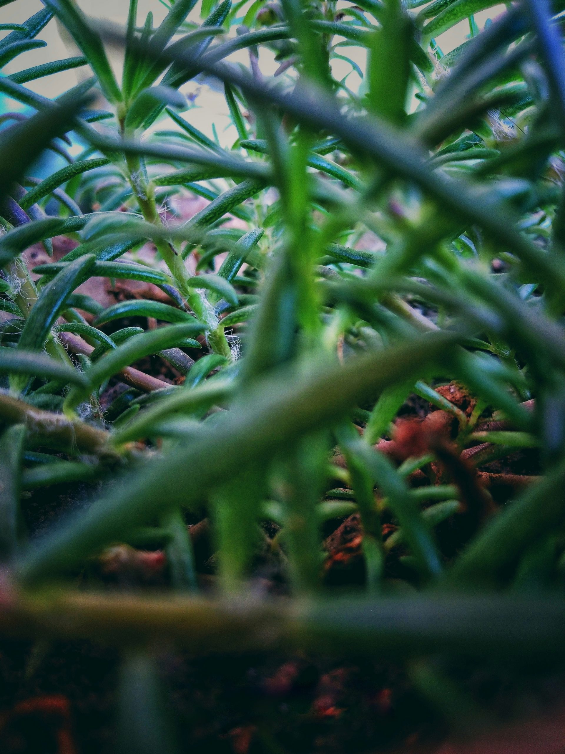 Under the grass
